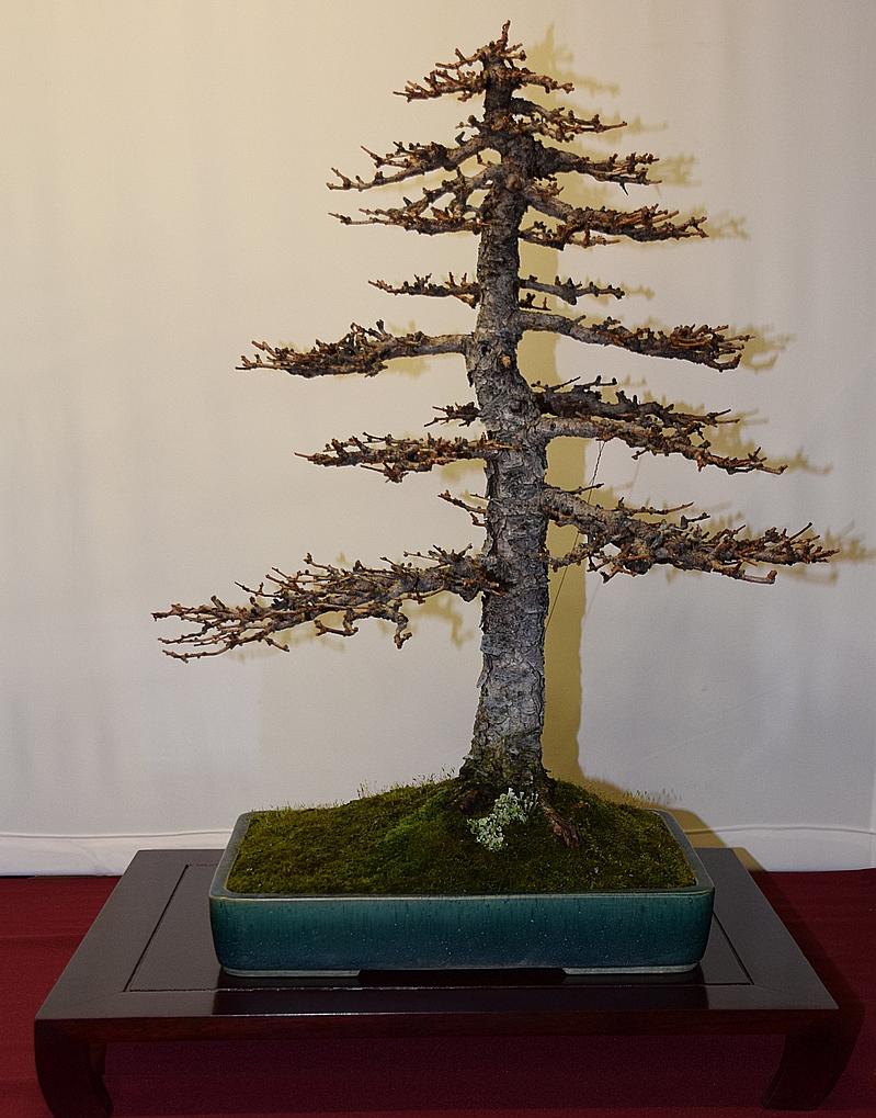 Larix tokonoma opstelling