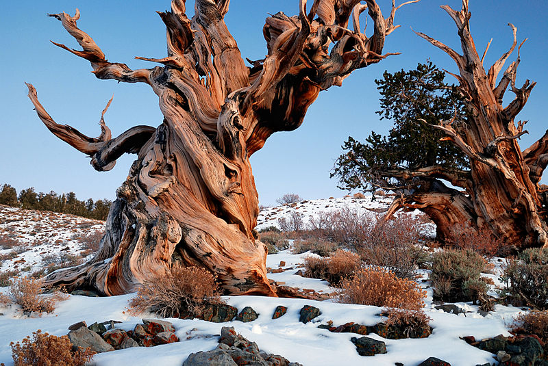 EUK vergadering 2 maart 2015 - Lezing Bristlecone pines 010
