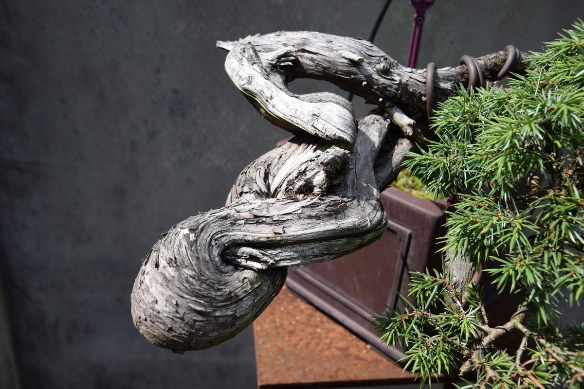 EUK @ Bonsai museum Dusseldorf 26-07-2015 064