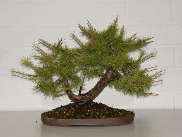 EUK vergadering Larix & Pinus project 5 oktober 2015 012