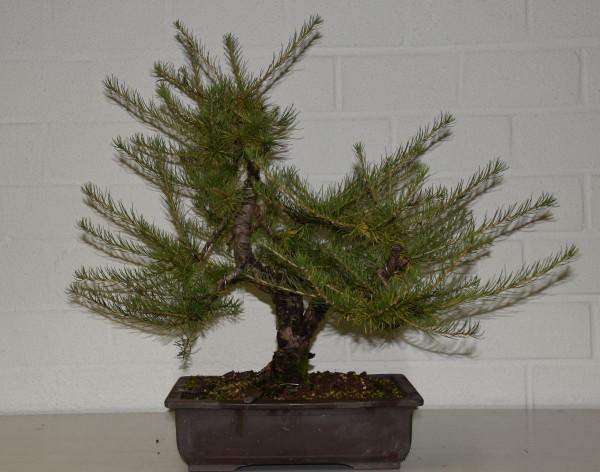 EUK vergadering Larix & Pinus project 5 oktober 2015 013
