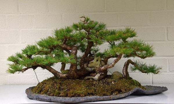 EUK vergadering Larix & Pinus project 5 oktober 2015 016