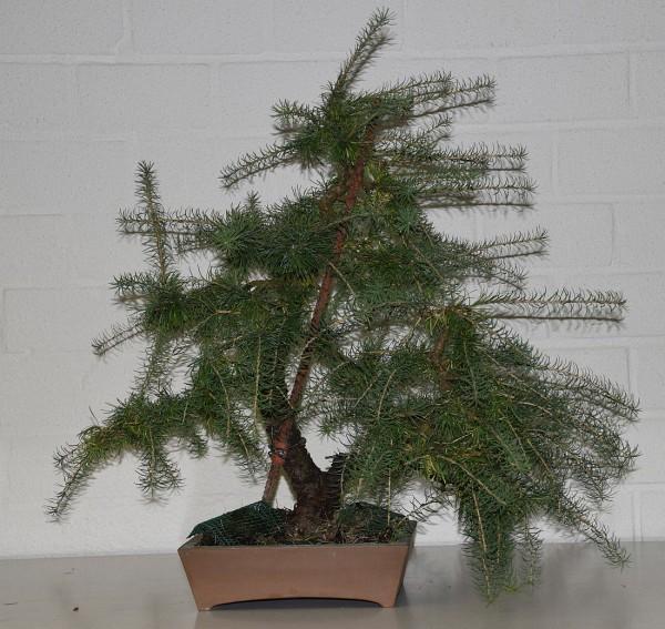 EUK vergadering Larix & Pinus project 5 oktober 2015 019