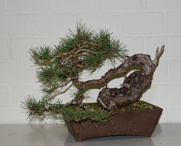 EUK vergadering Larix & Pinus project 5 oktober 2015 032
