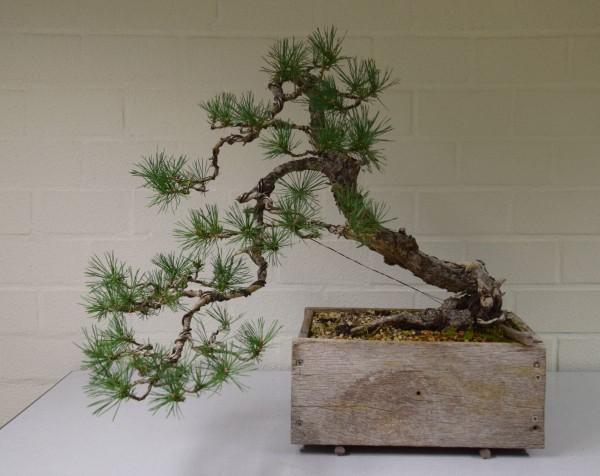 EUK vergadering Larix & Pinus project 5 oktober 2015 036