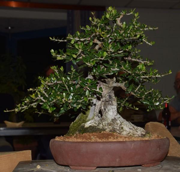 EUK vergadering Larix & Pinus project 5 oktober 2015 039
