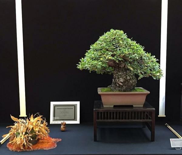 Saulieu Quercus JP Polmans 2
