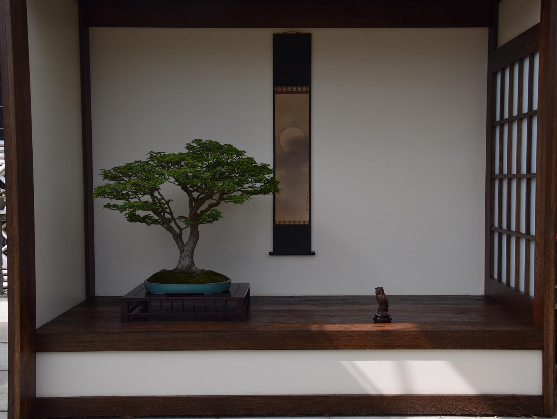 Kei Bonsai Kai 28-05-2016 001