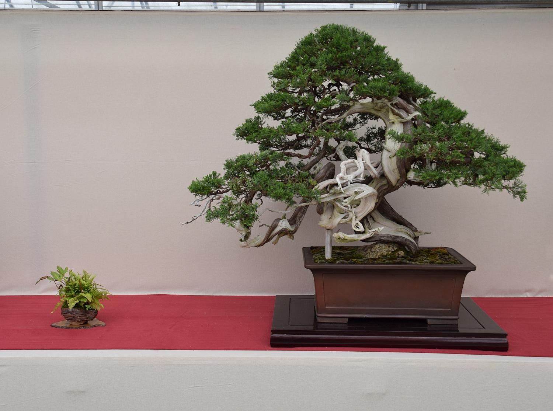 Kei Bonsai Kai 28-05-2016 002