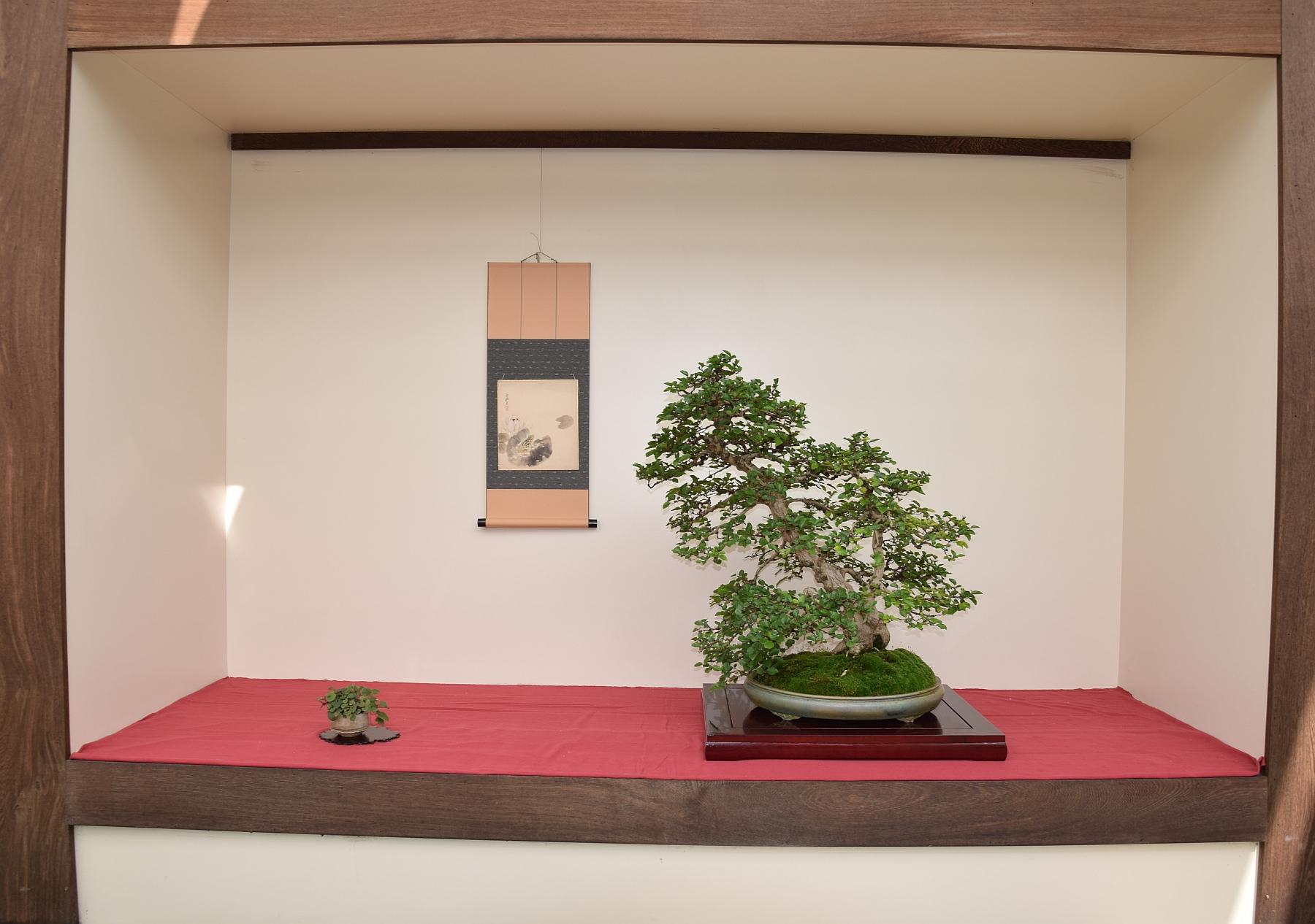Kei Bonsai Kai 28-05-2016 006g