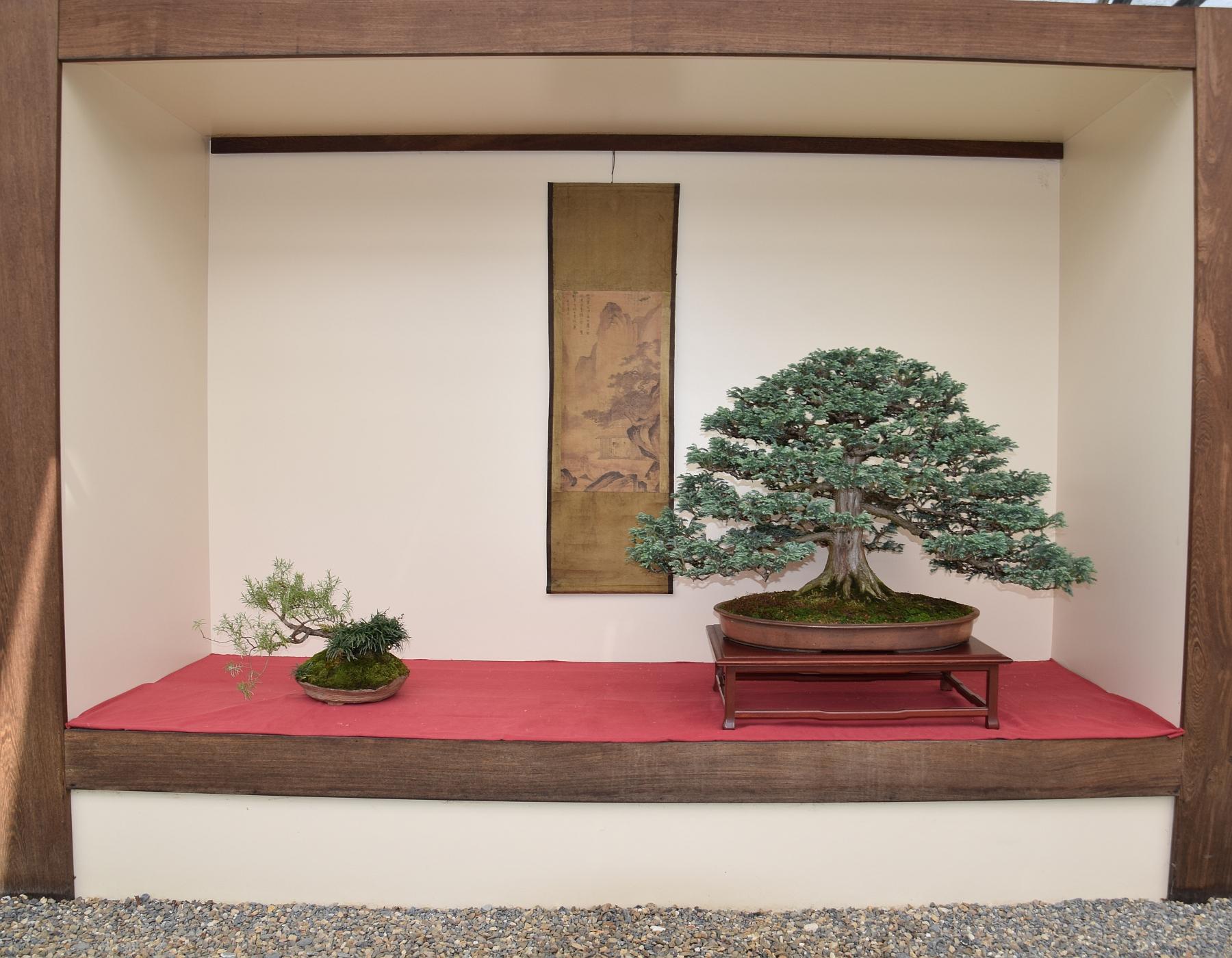 Kei Bonsai Kai 28-05-2016 007