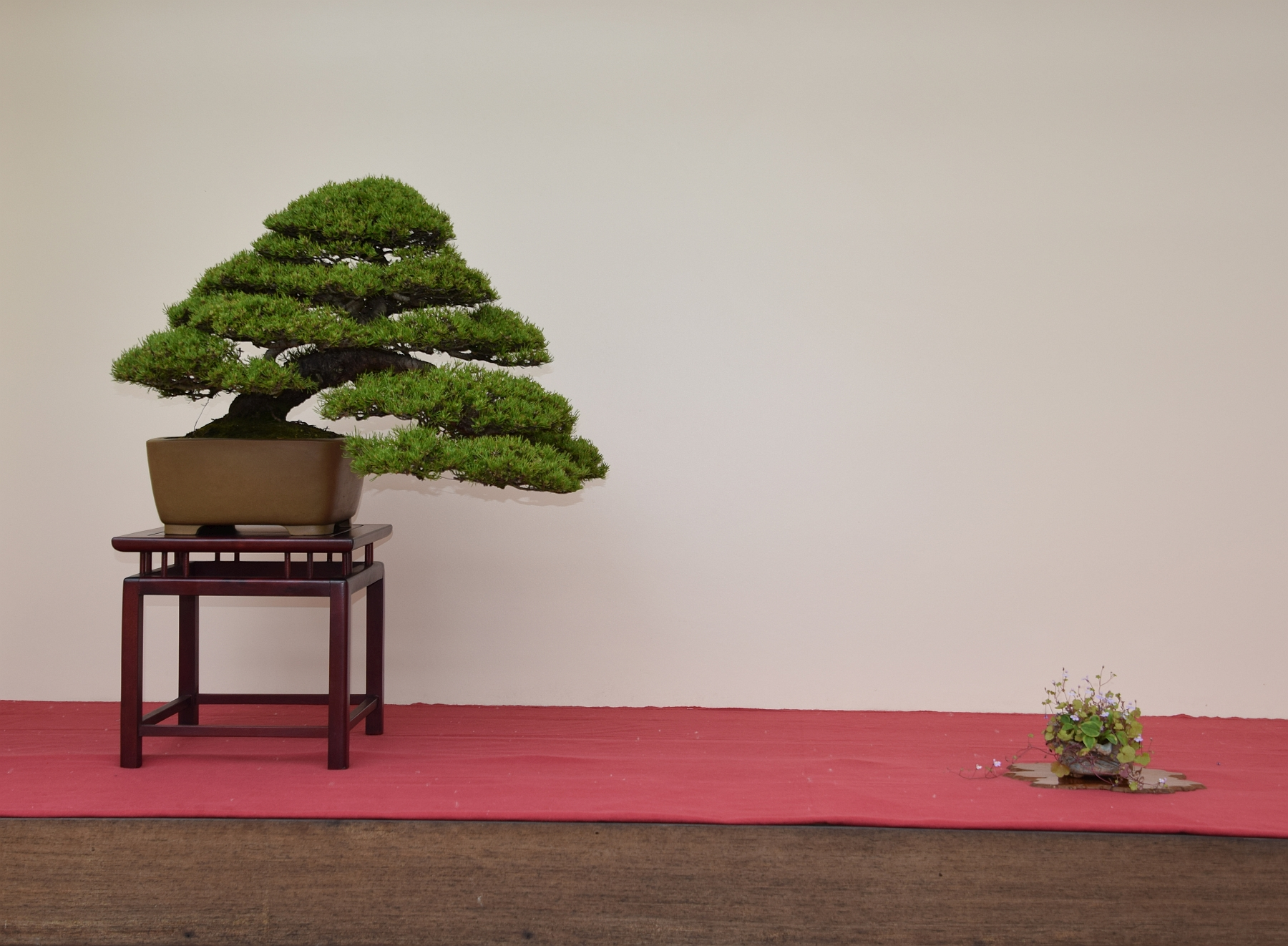 Kei Bonsai Kai 28-05-2016 015