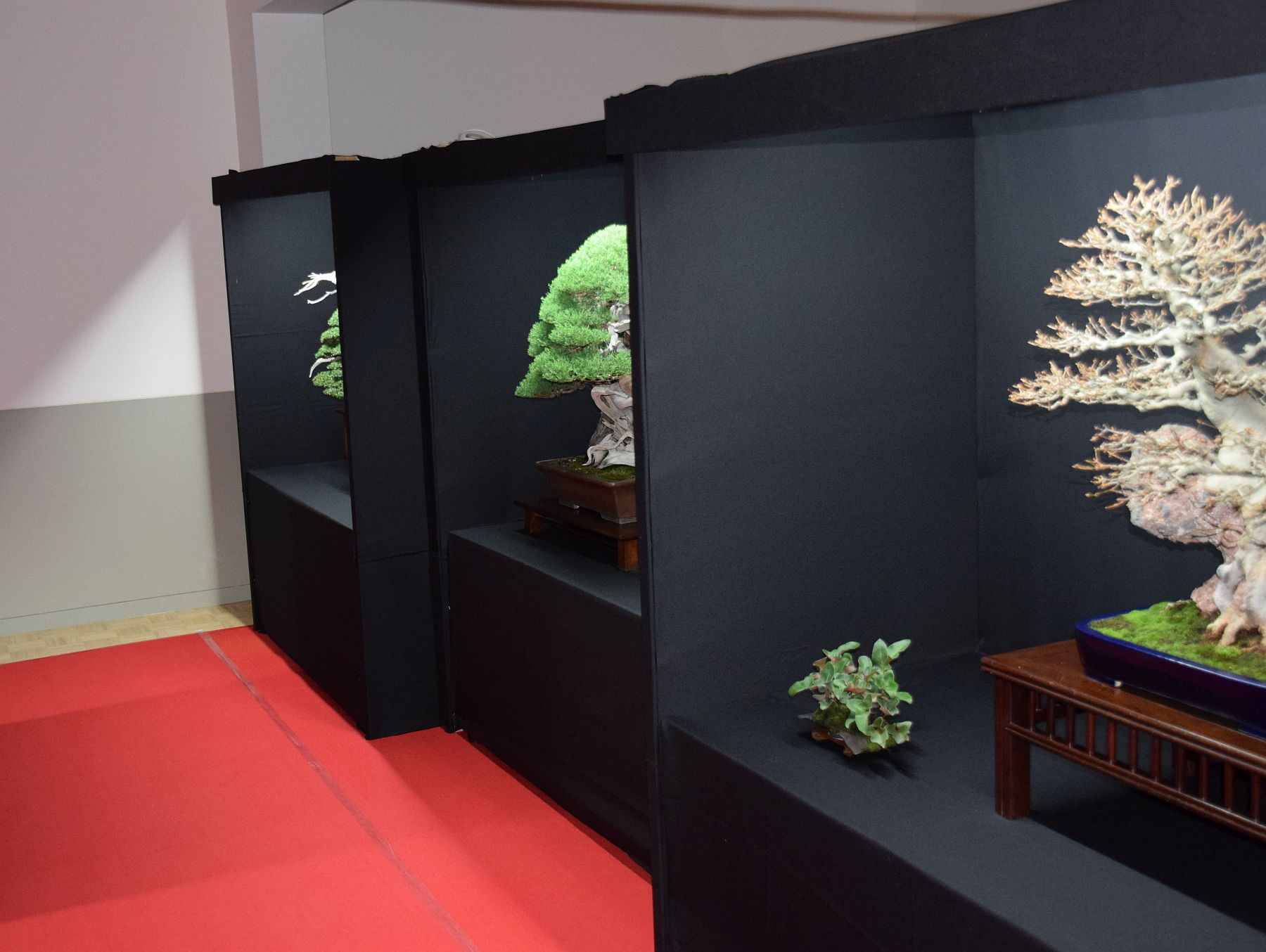 bonsai-museum-luis-vallejo-001