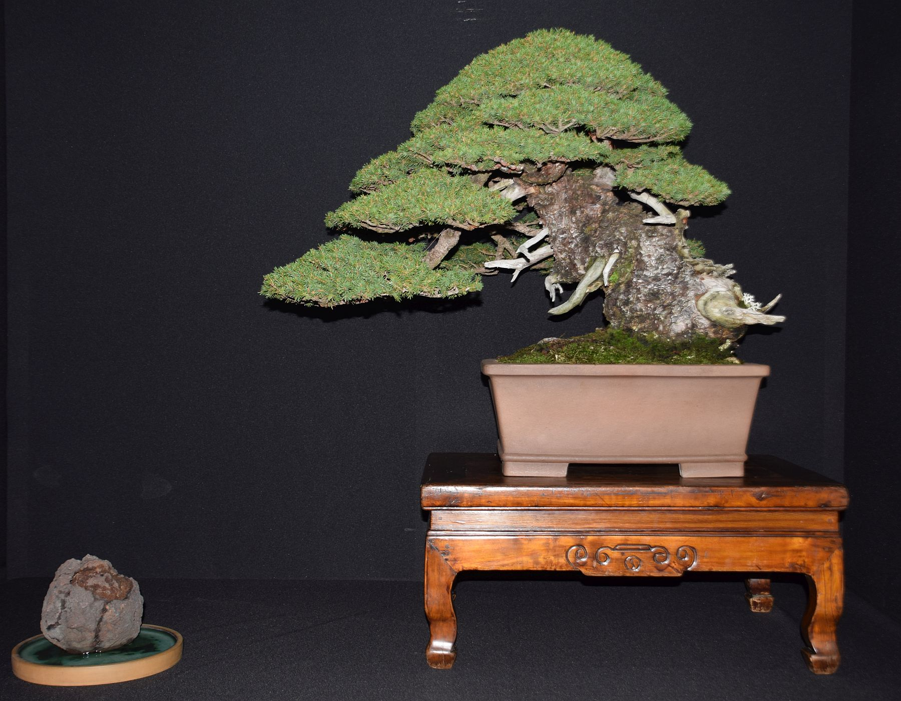 bonsai-museum-luis-vallejo-003