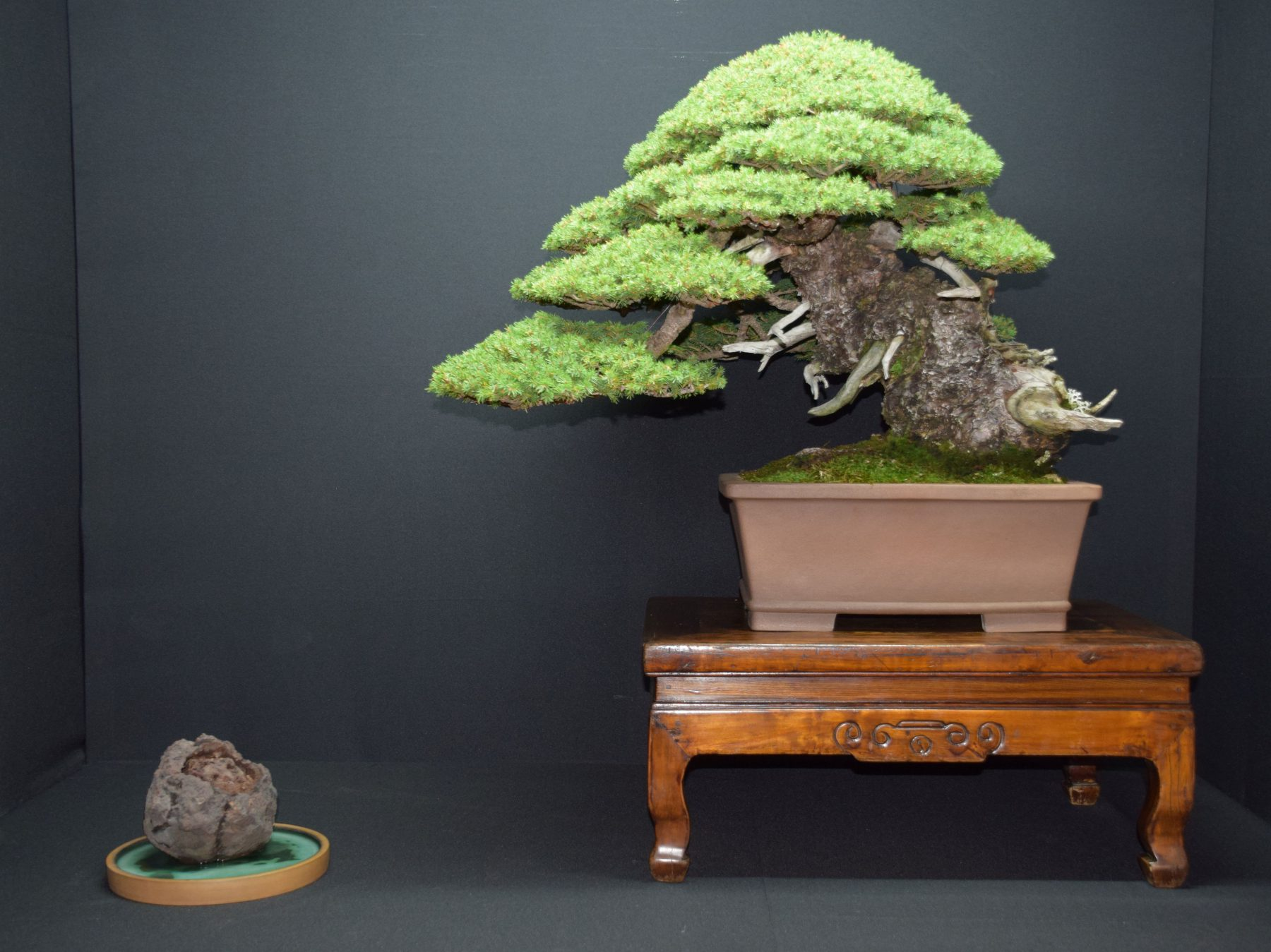 bonsai-museum-luis-vallejo-004