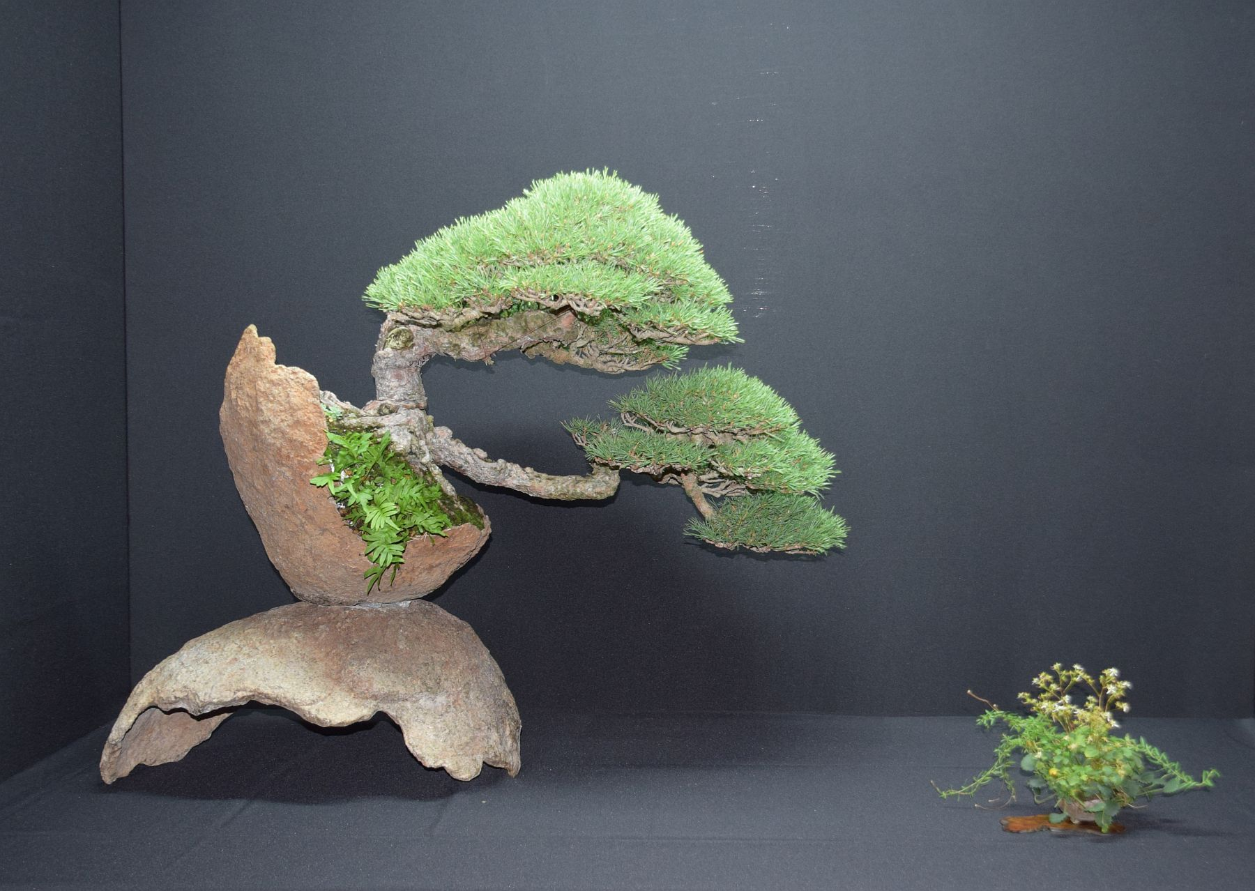 bonsai-museum-luis-vallejo-006