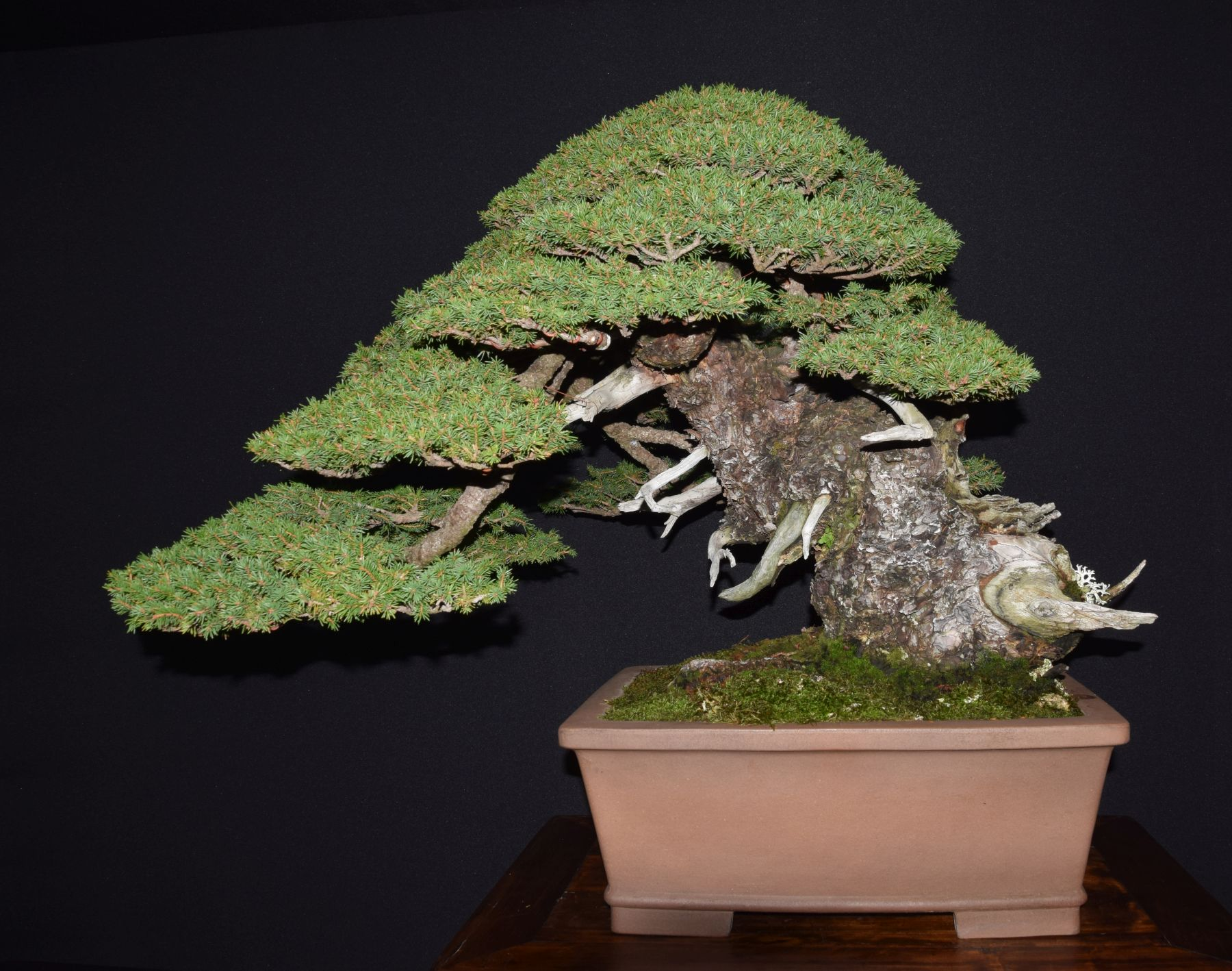 bonsai-museum-luis-vallejo-010