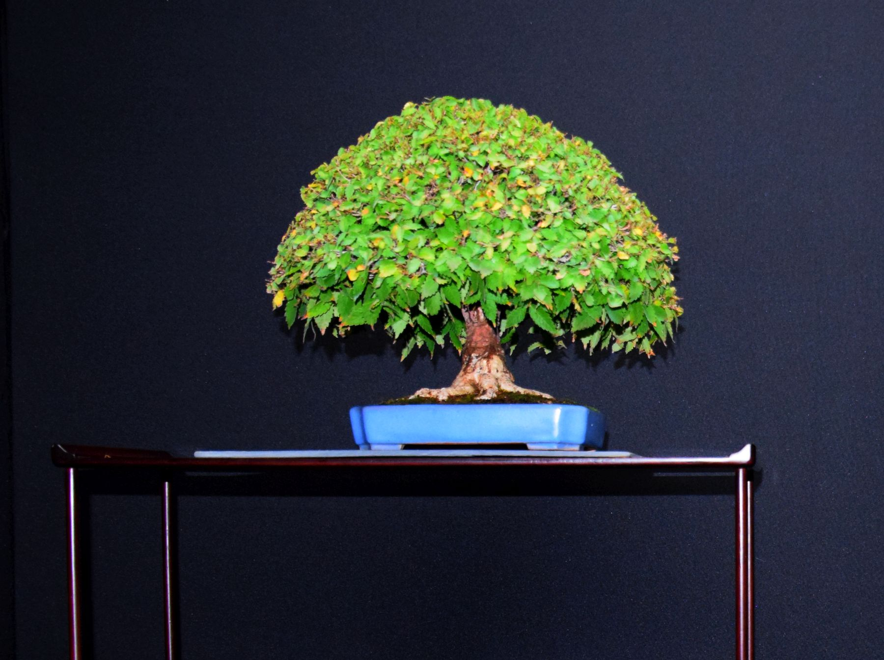 bonsai-museum-luis-vallejo-011