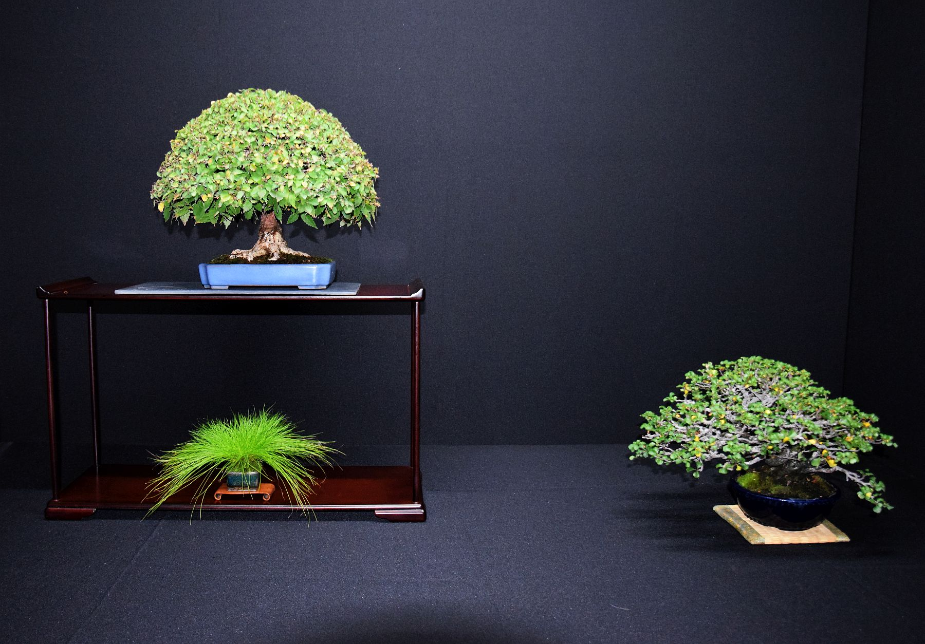 bonsai-museum-luis-vallejo-012