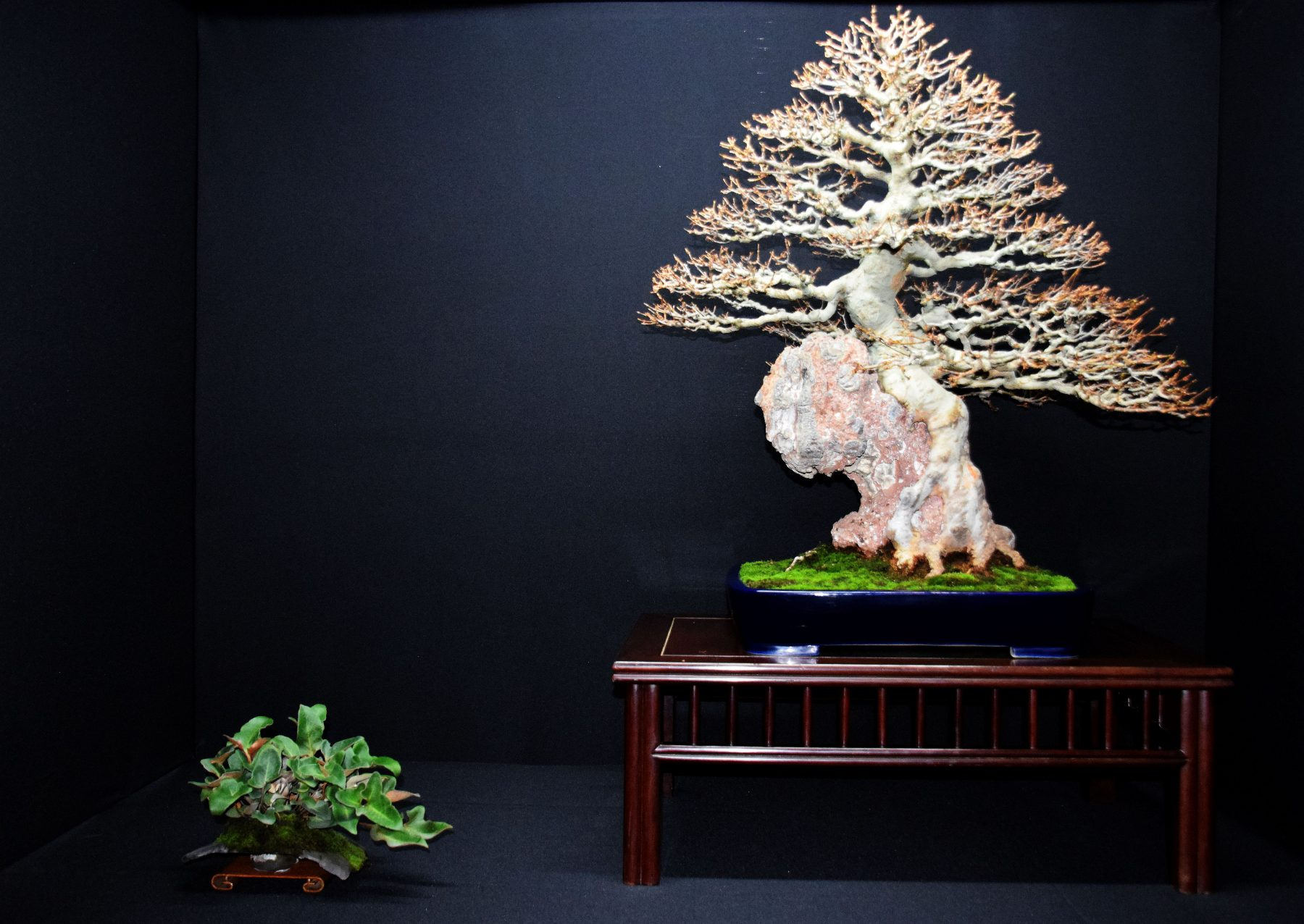 bonsai-museum-luis-vallejo-013