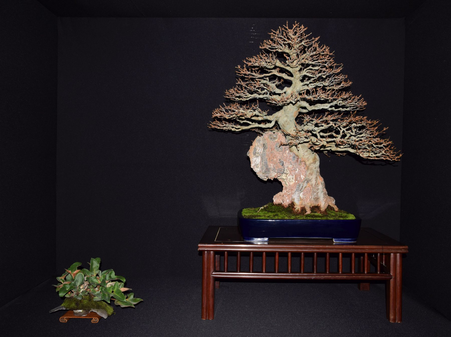 bonsai-museum-luis-vallejo-014