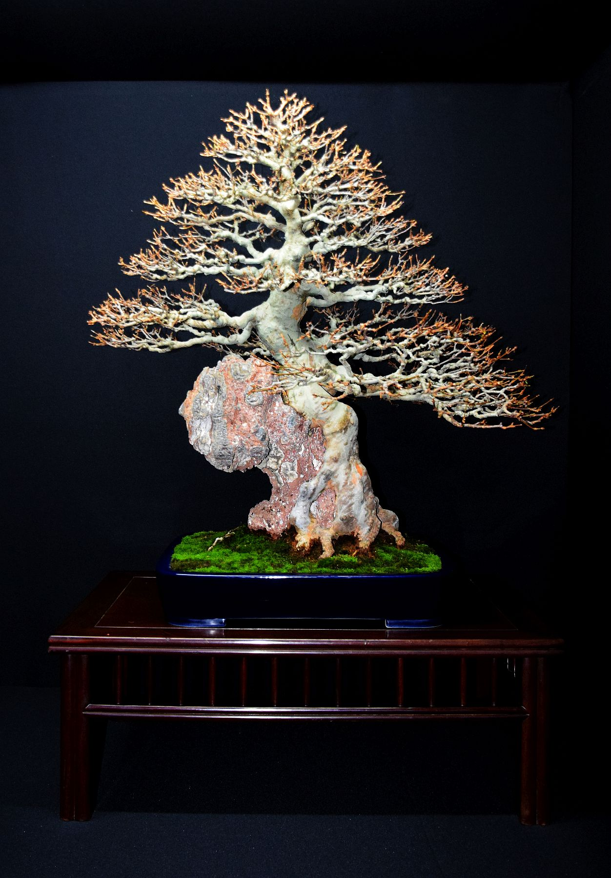 bonsai-museum-luis-vallejo-015