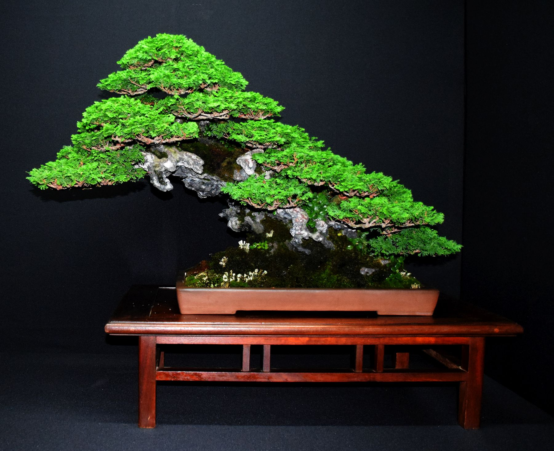 bonsai-museum-luis-vallejo-016