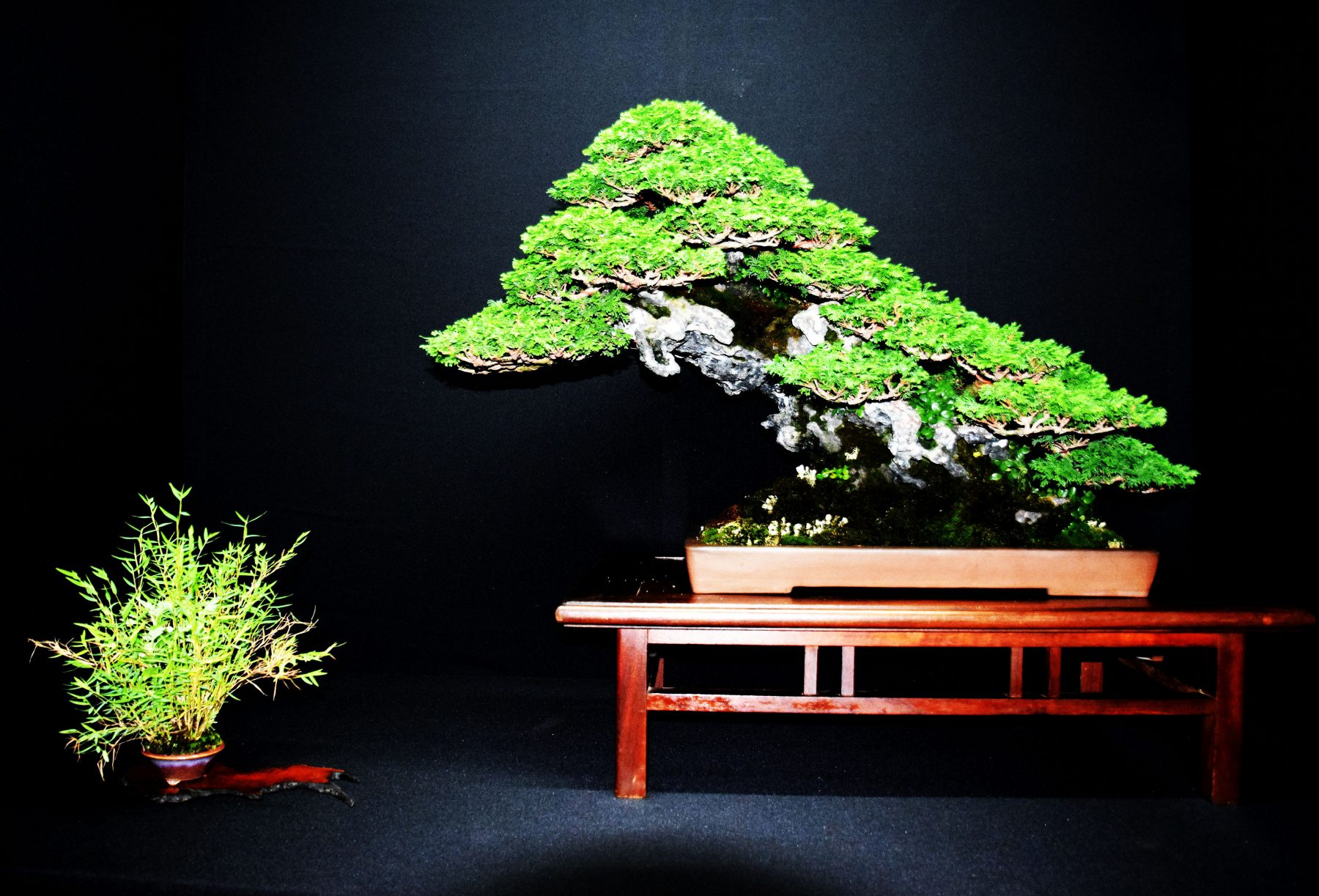 bonsai-museum-luis-vallejo-017