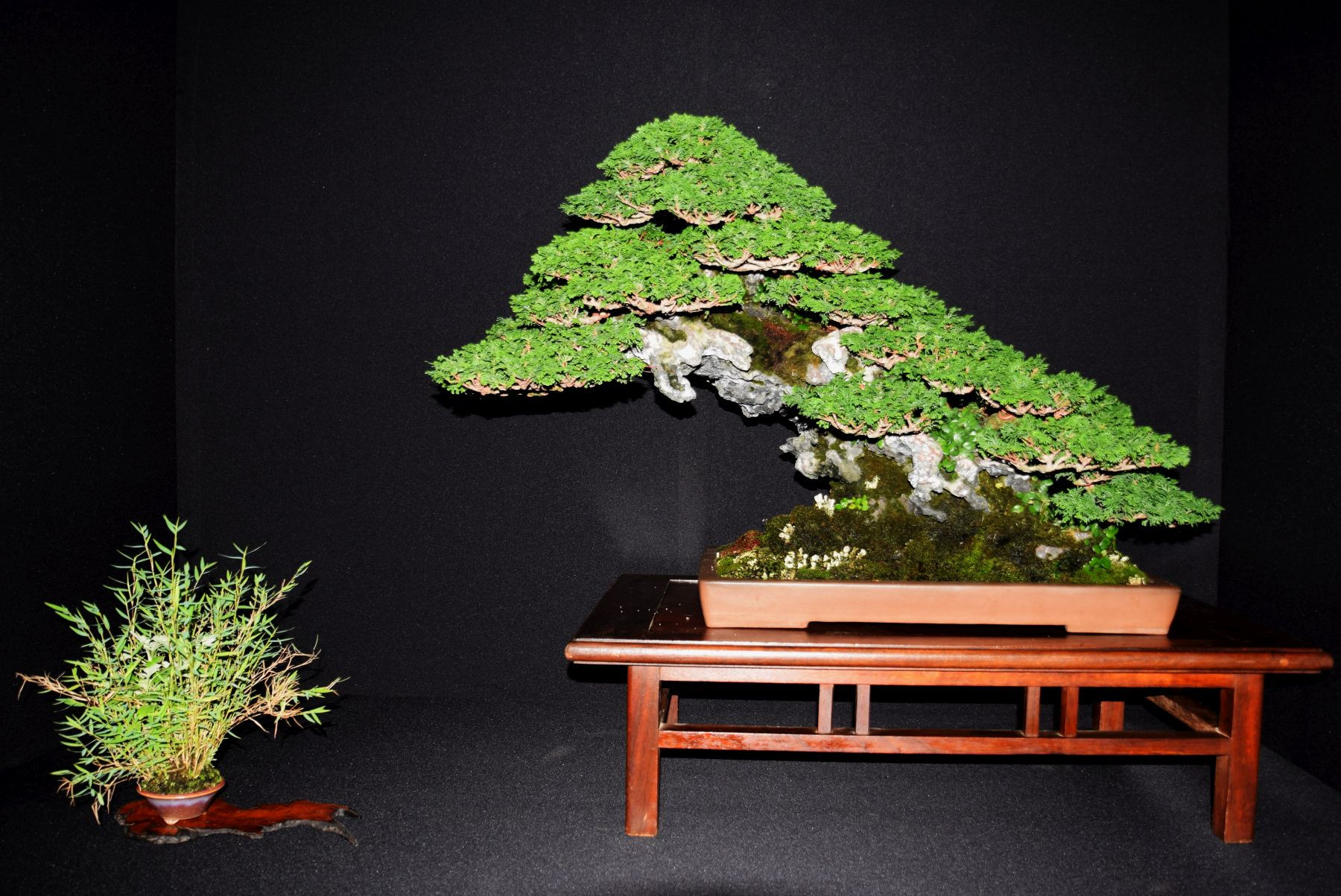 bonsai-museum-luis-vallejo-019