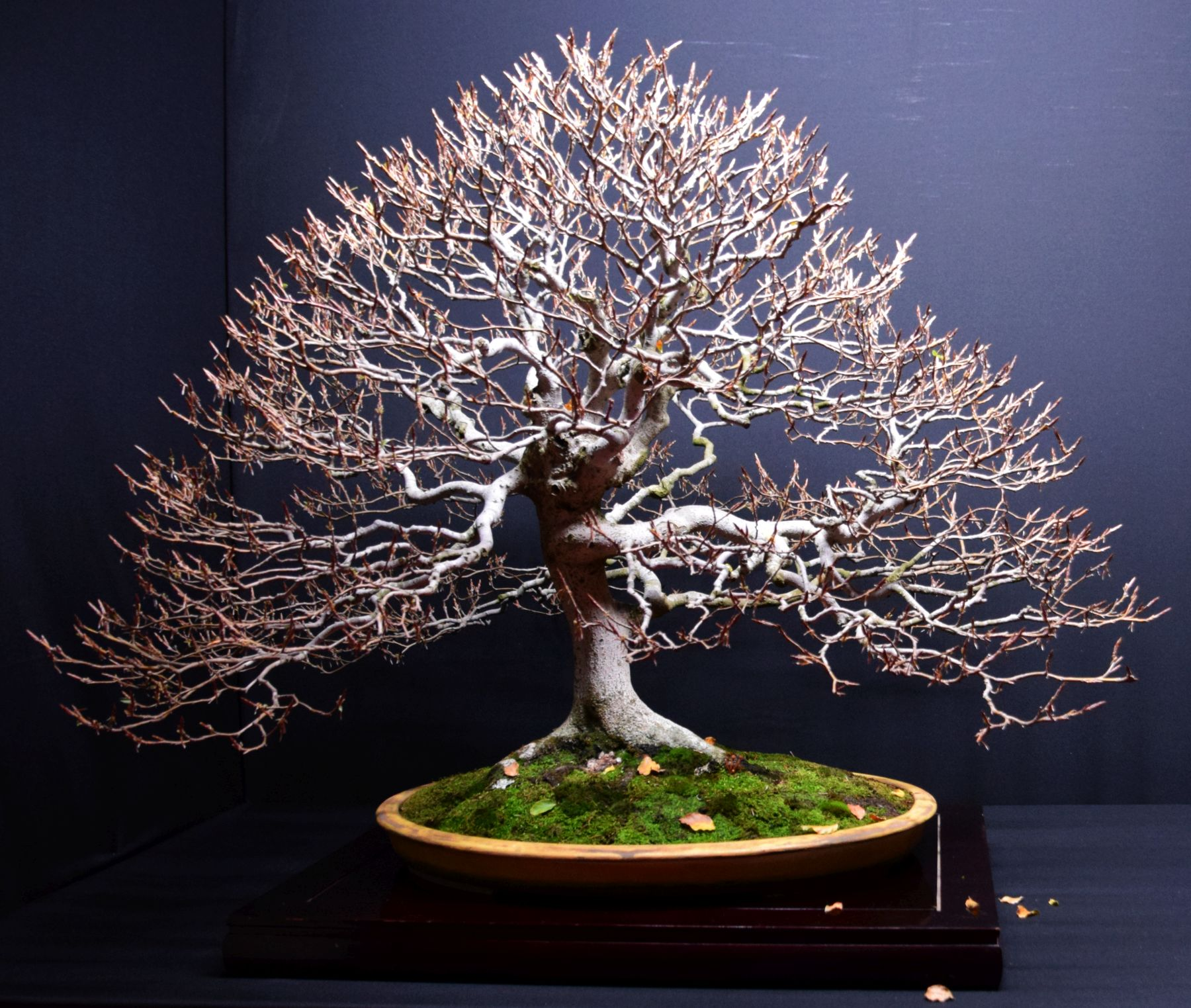 bonsai-museum-luis-vallejo-021