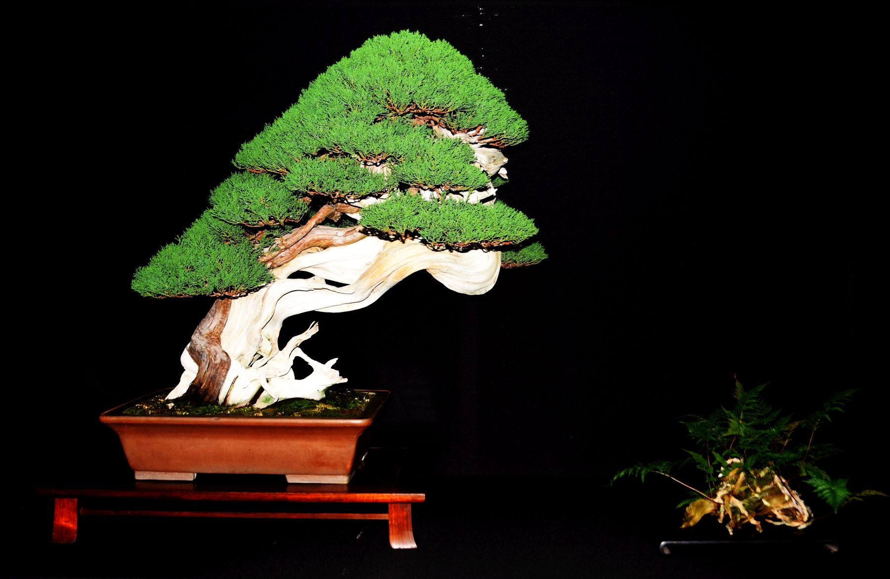 bonsai-museum-luis-vallejo-024