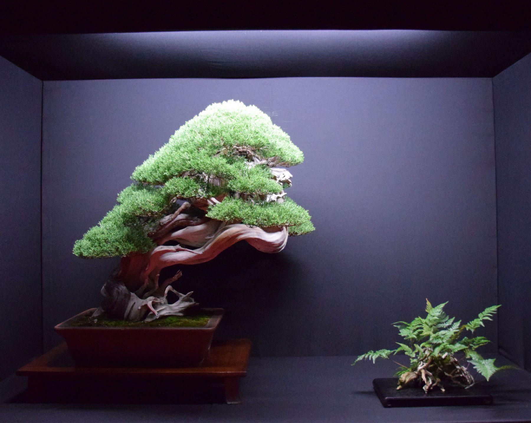 bonsai-museum-luis-vallejo-025
