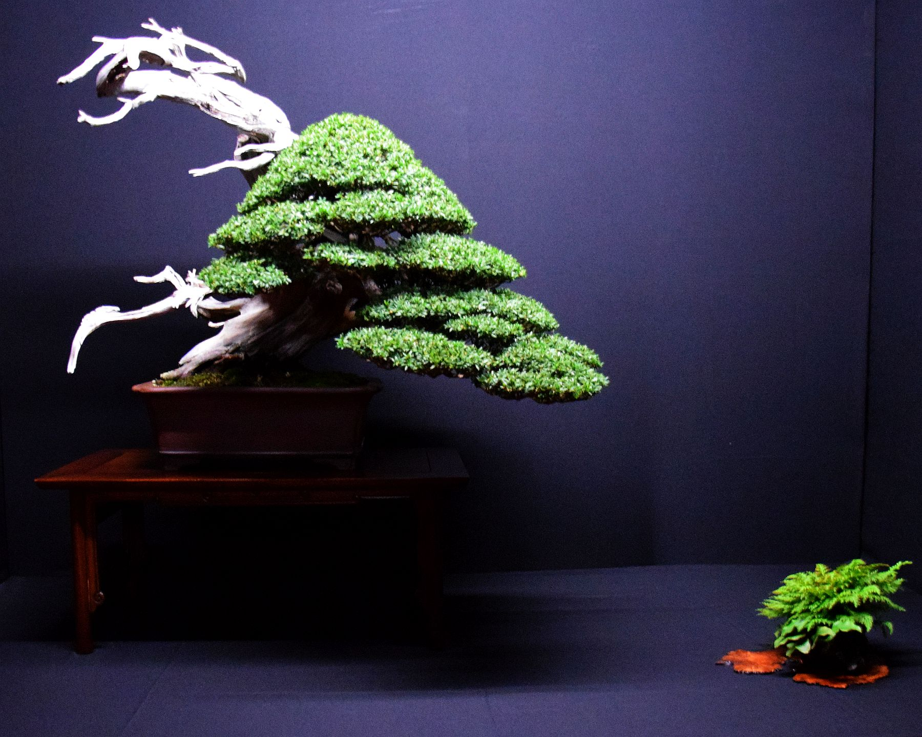 bonsai-museum-luis-vallejo-026