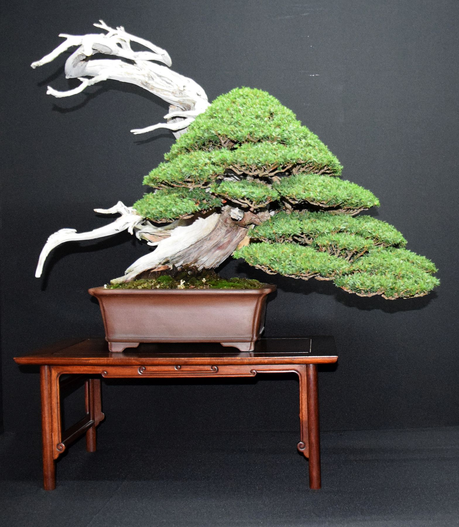bonsai-museum-luis-vallejo-027
