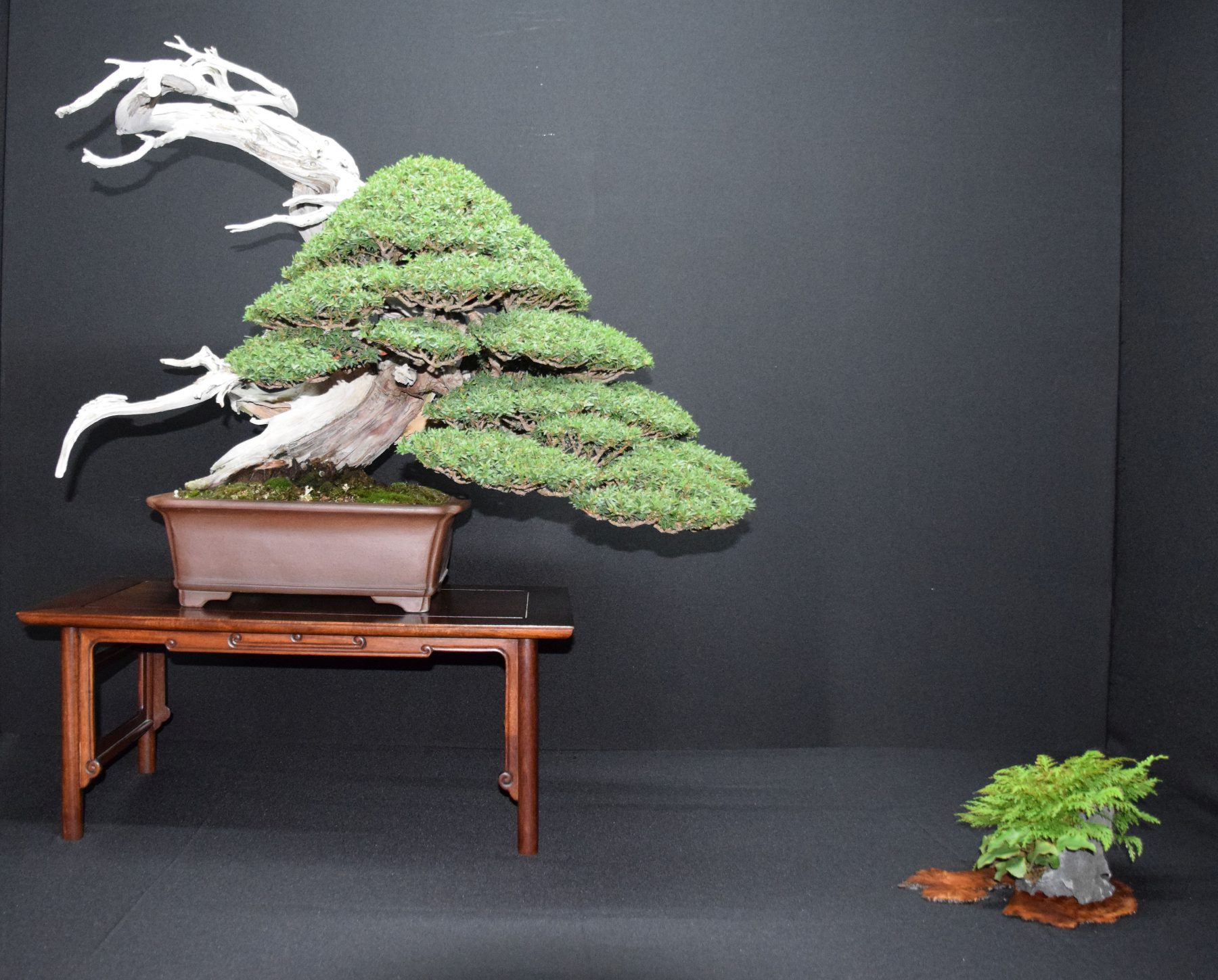 bonsai-museum-luis-vallejo-029