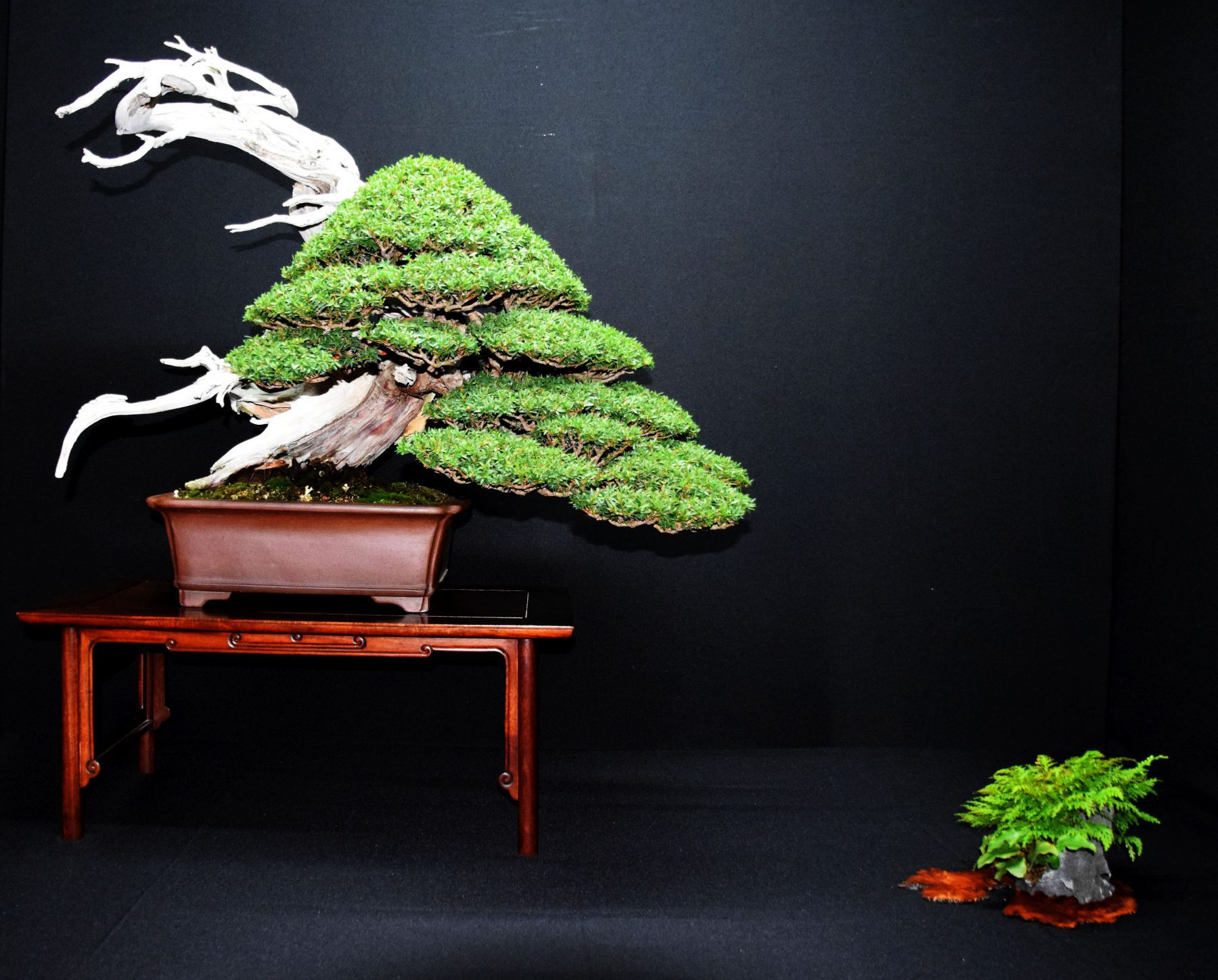 bonsai-museum-luis-vallejo-030