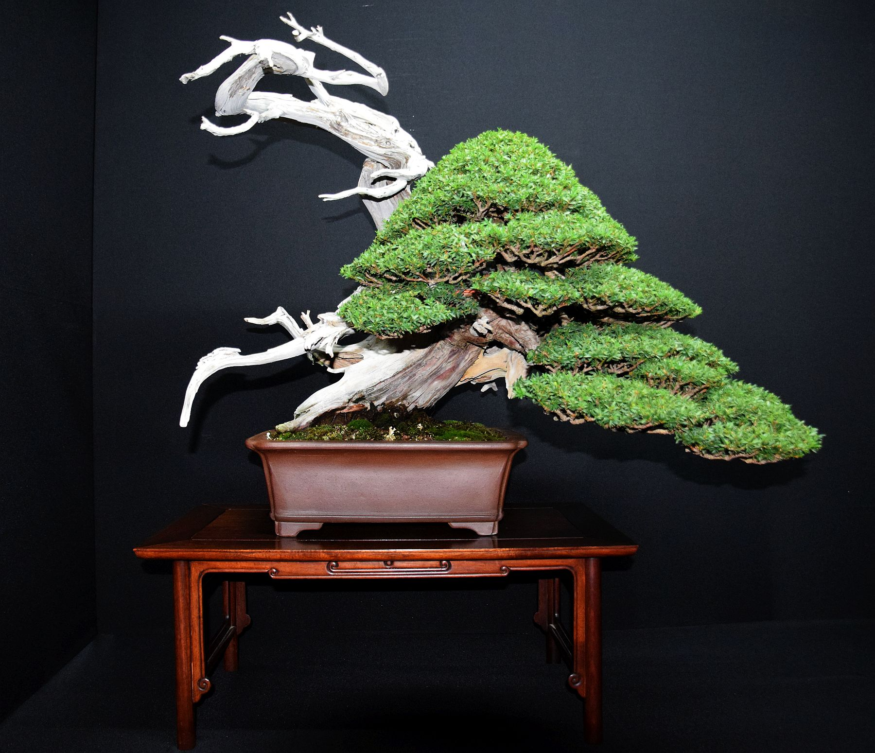 bonsai-museum-luis-vallejo-031