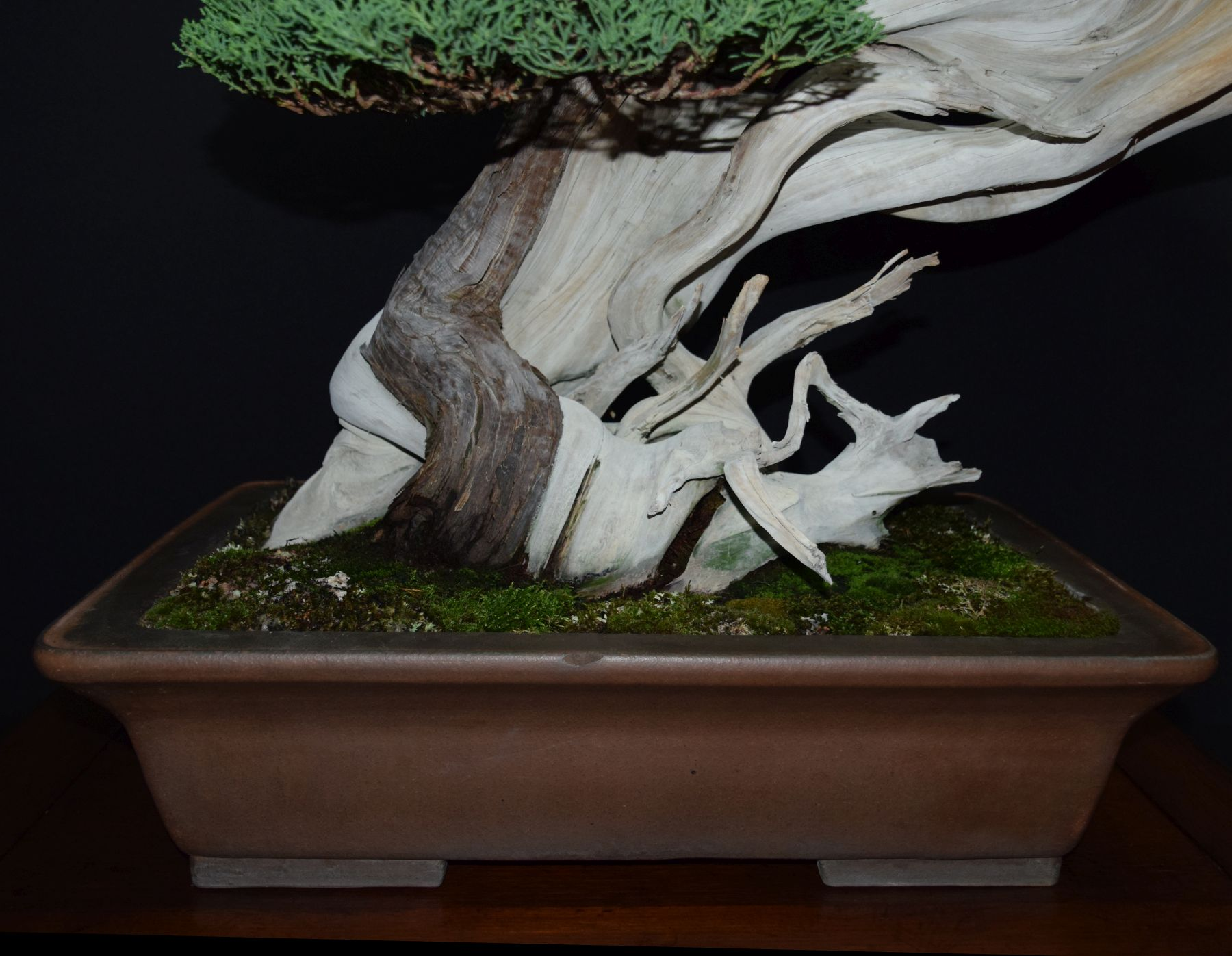 bonsai-museum-luis-vallejo-032
