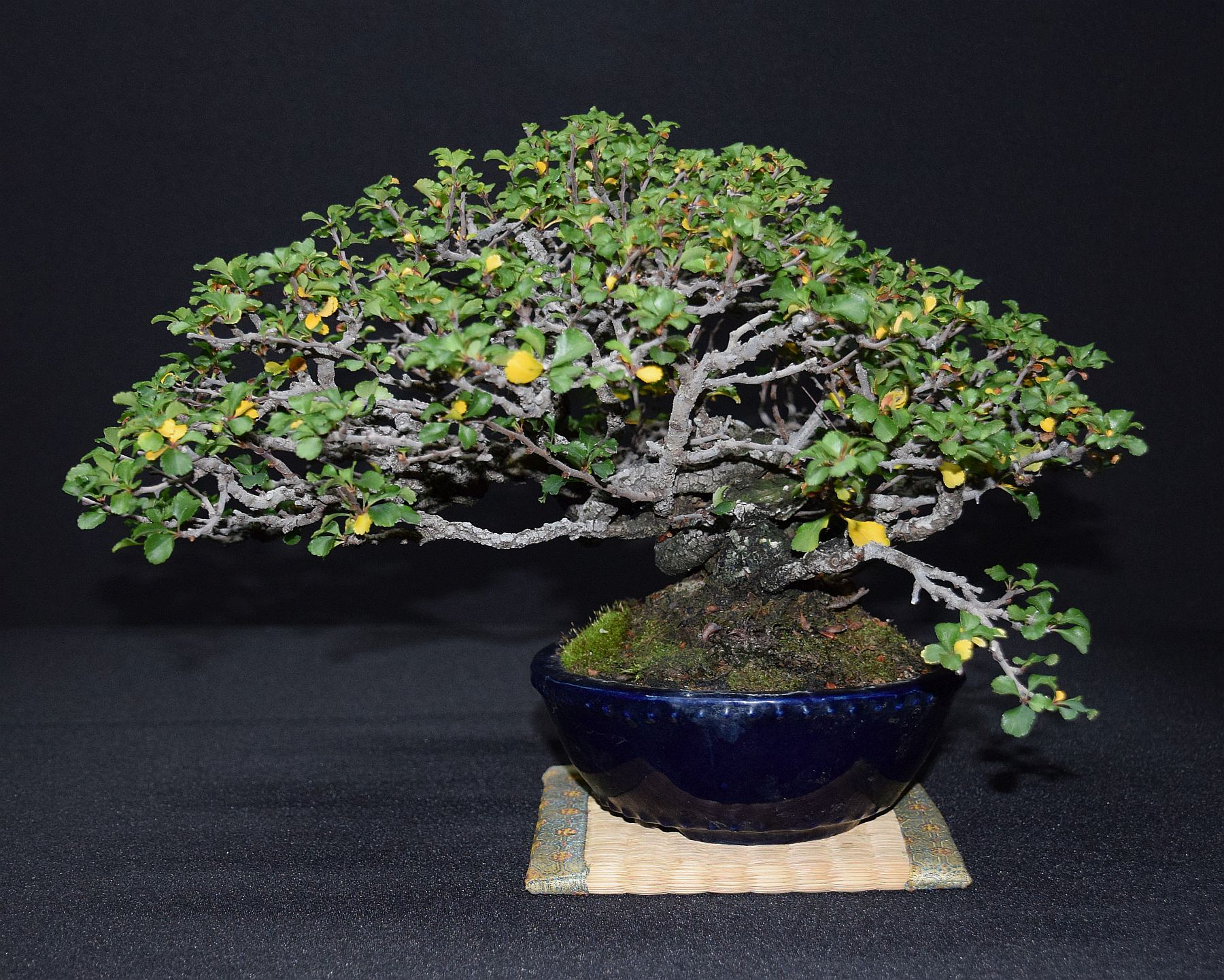 bonsai-museum-luis-vallejo-038