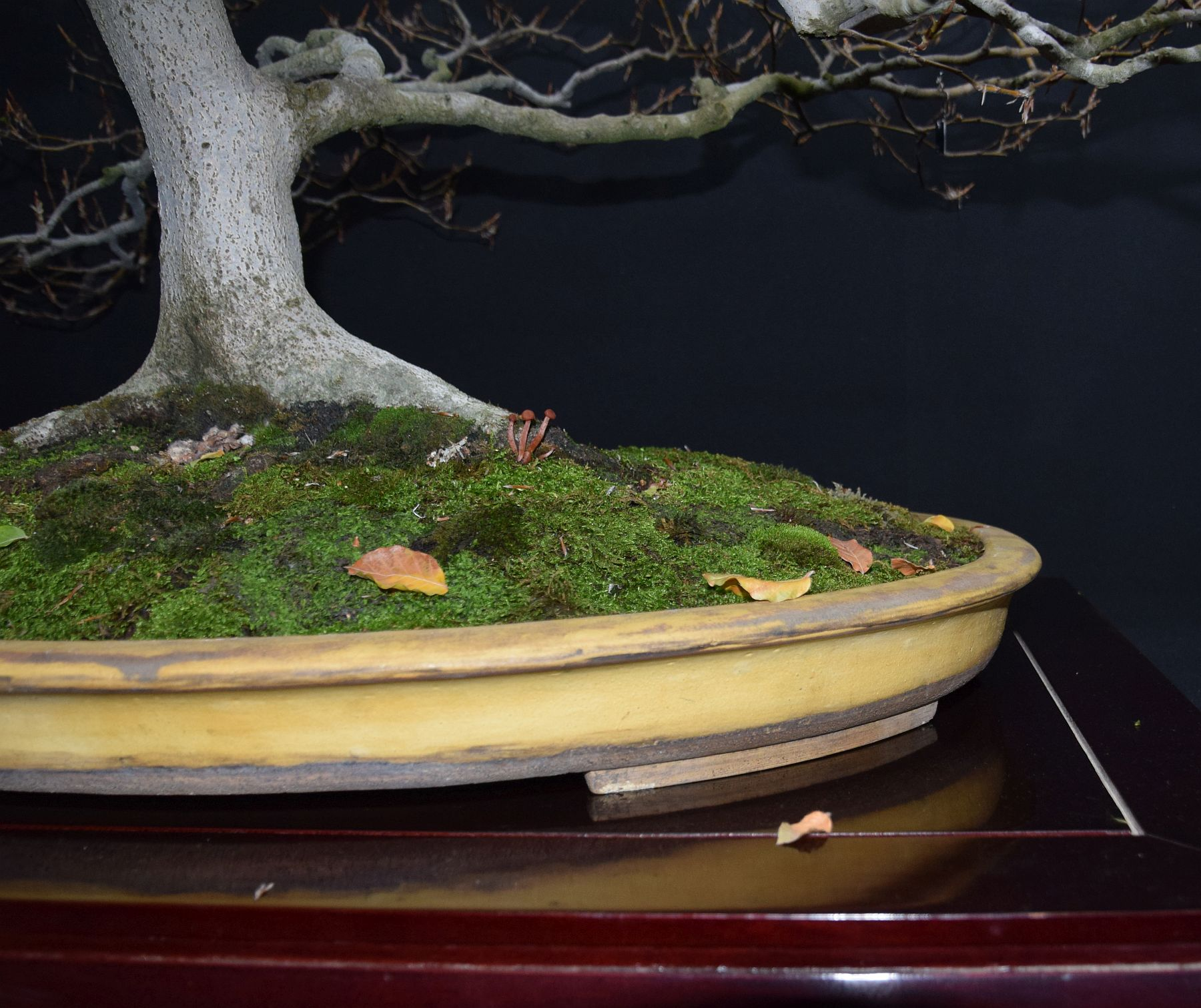 bonsai-museum-luis-vallejo-040