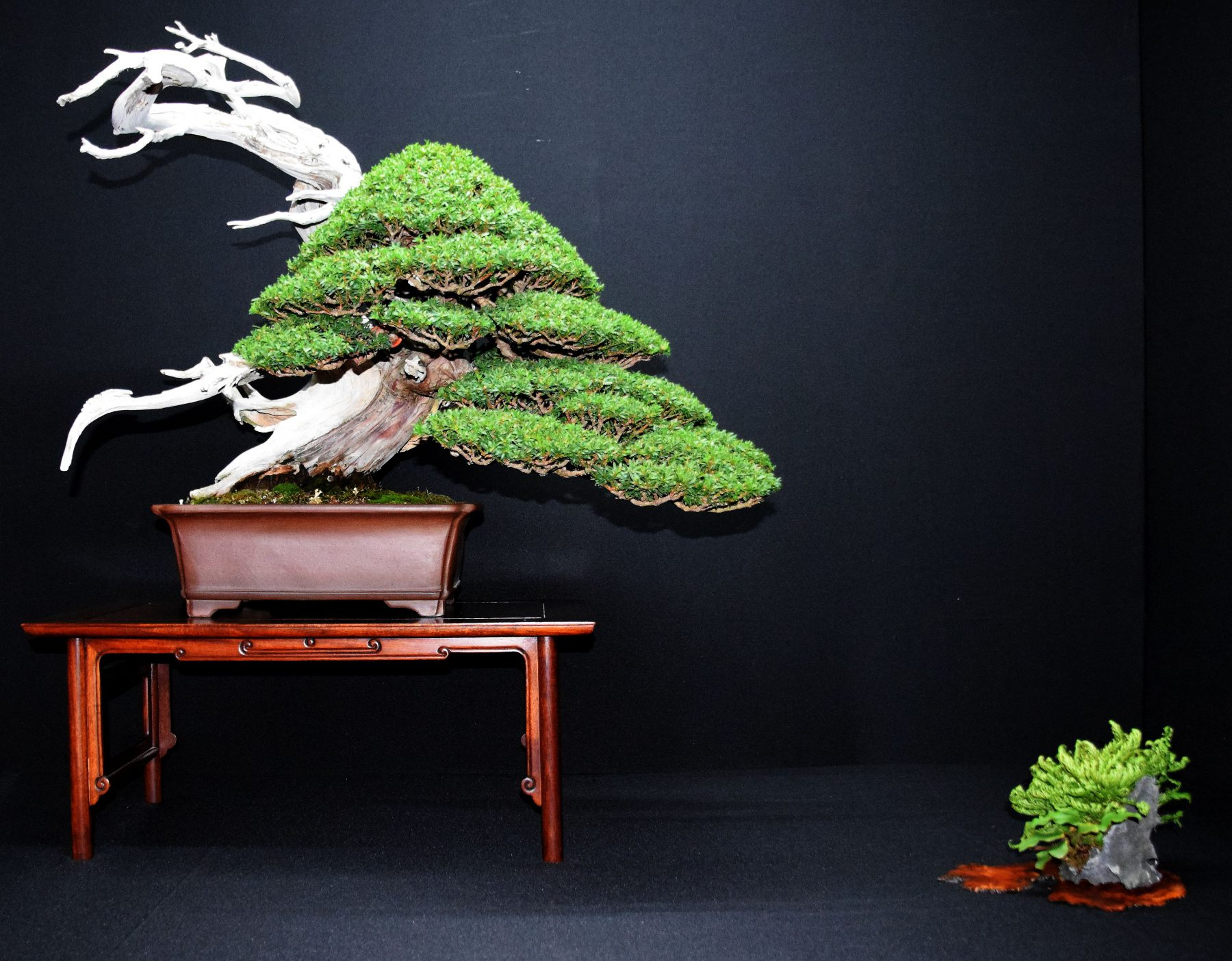 bonsai-museum-luis-vallejo-041