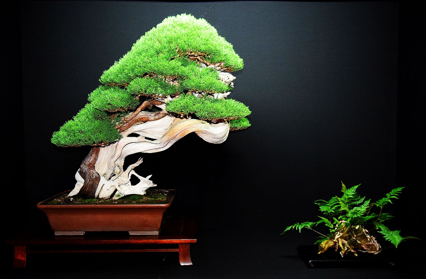 bonsai-museum-luis-vallejo-042
