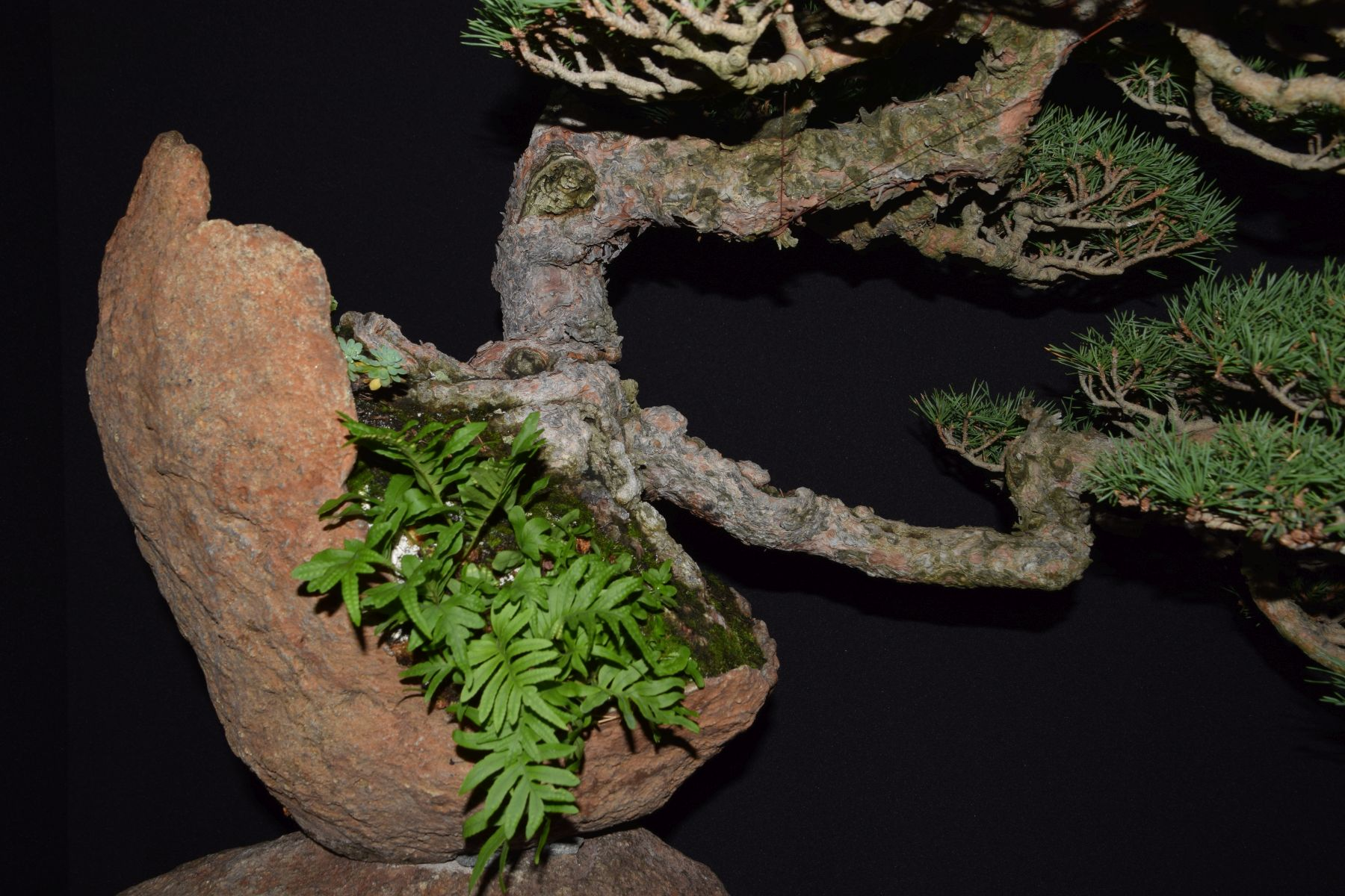 bonsai-museum-luis-vallejo-045