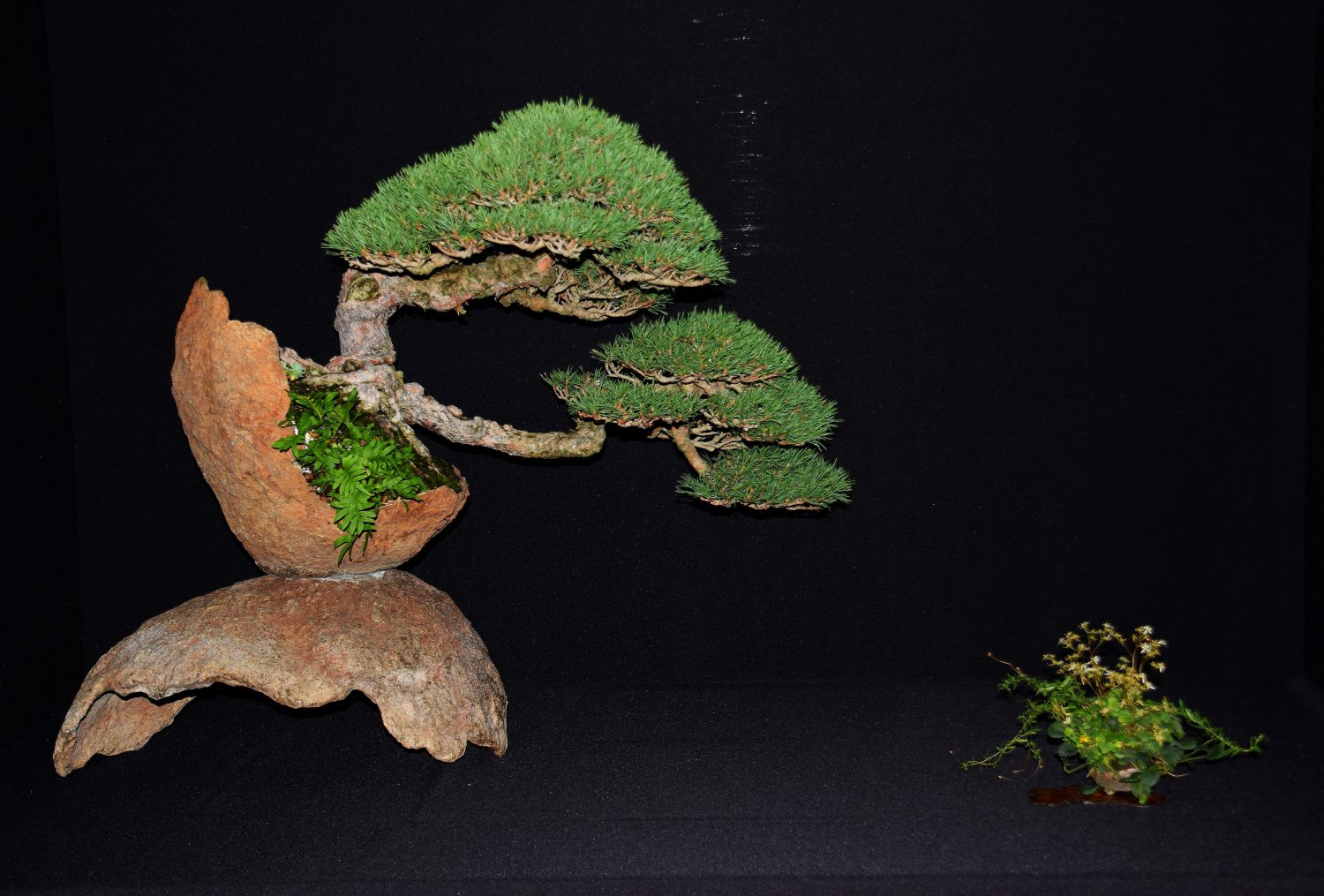 bonsai-museum-luis-vallejo-046