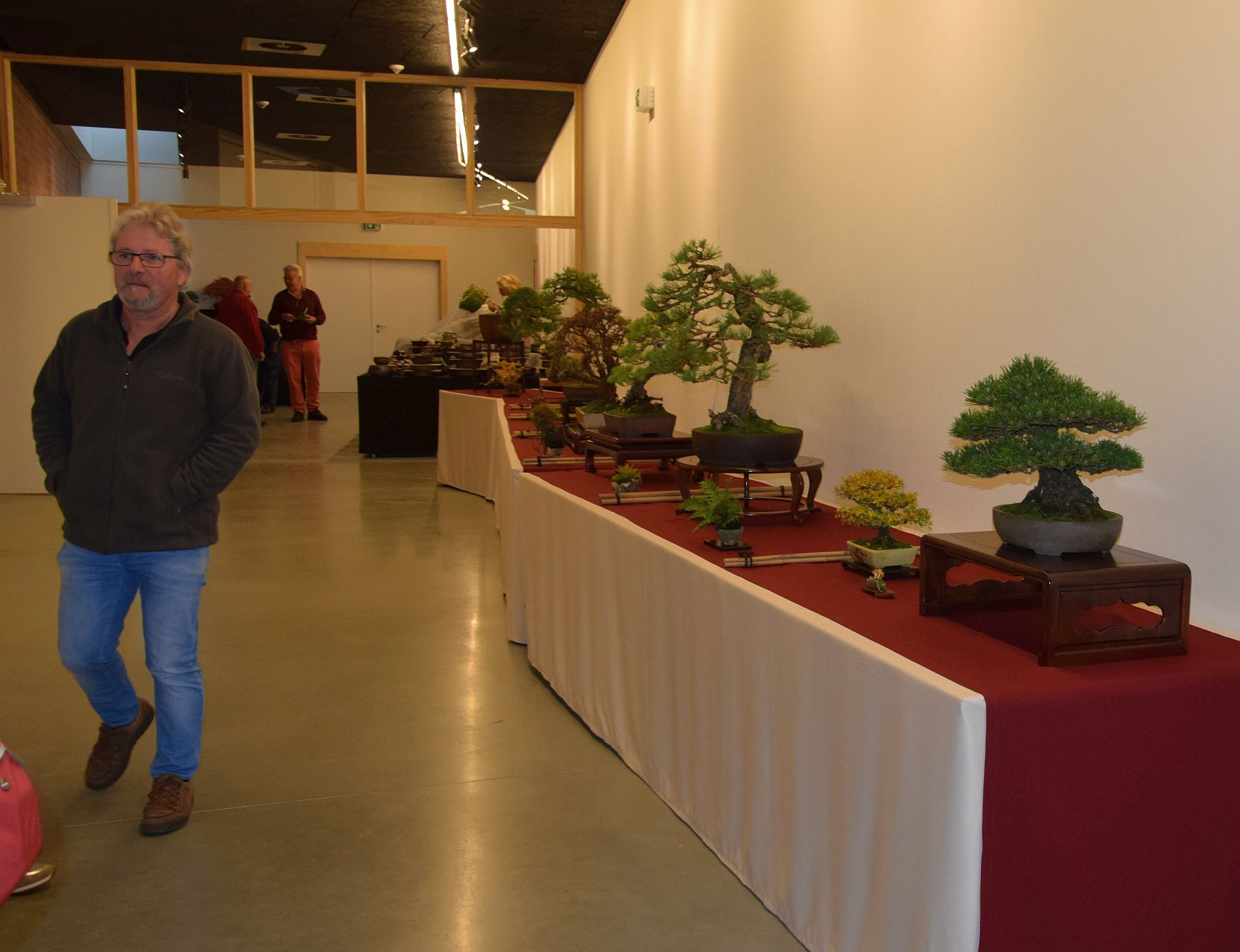 euk-bonsai-ten-2016-048