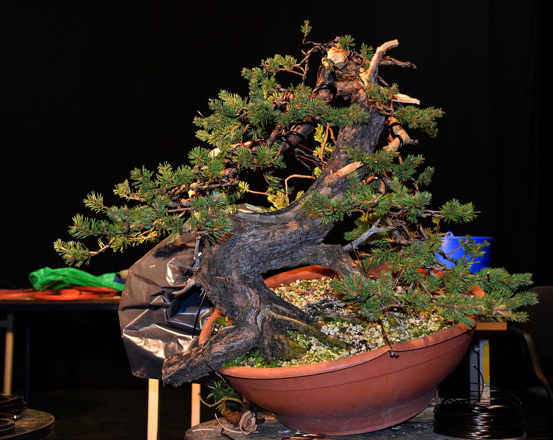 euk-bonsai-ten-2016-104