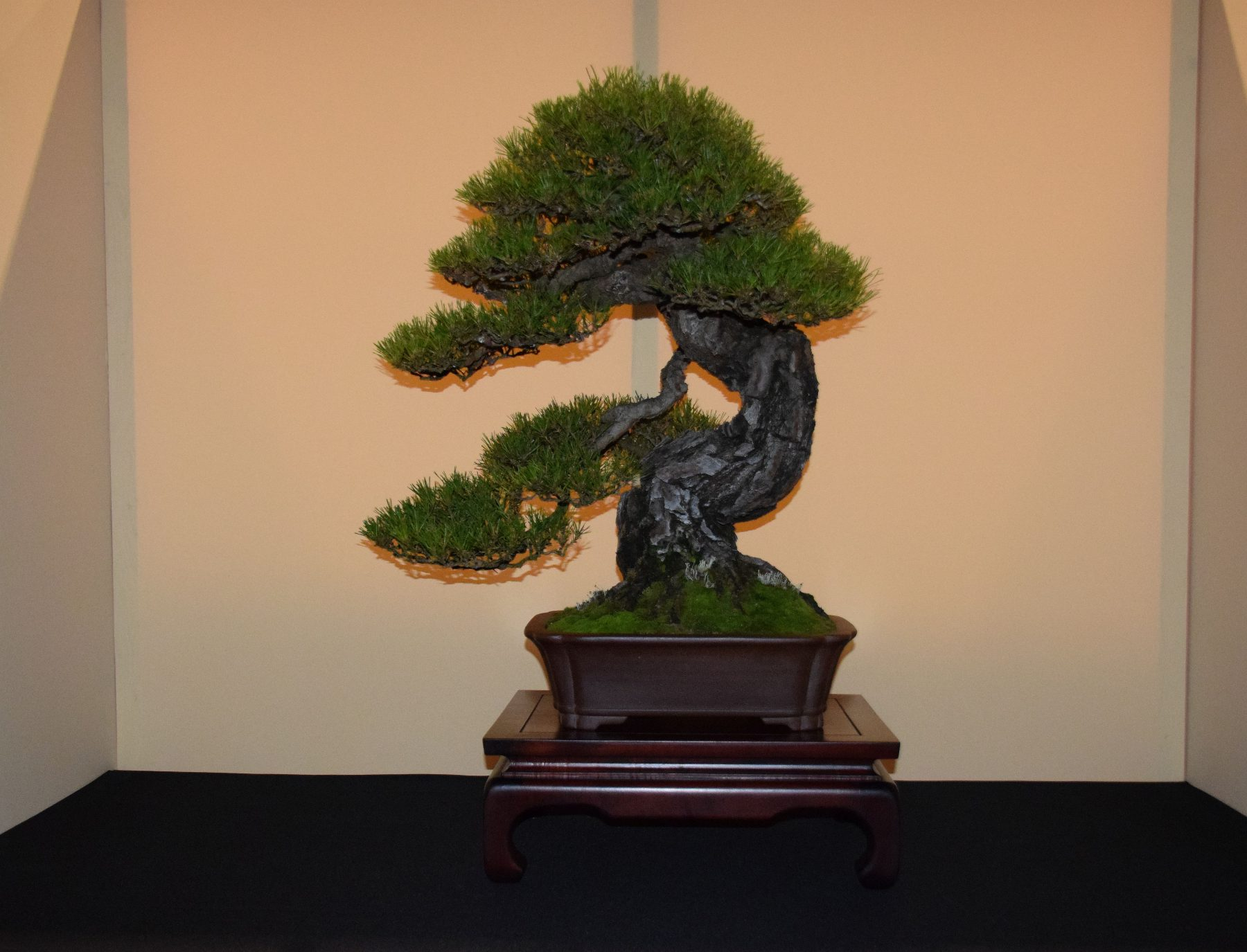 euk-bonsai-ten-2016-jp-polmans-collectie-002