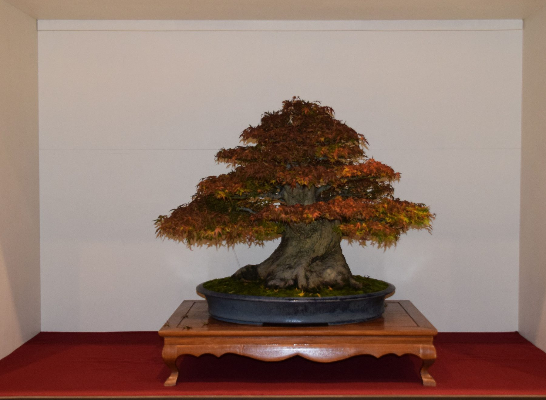 euk-bonsai-ten-2016-jp-polmans-collectie-006