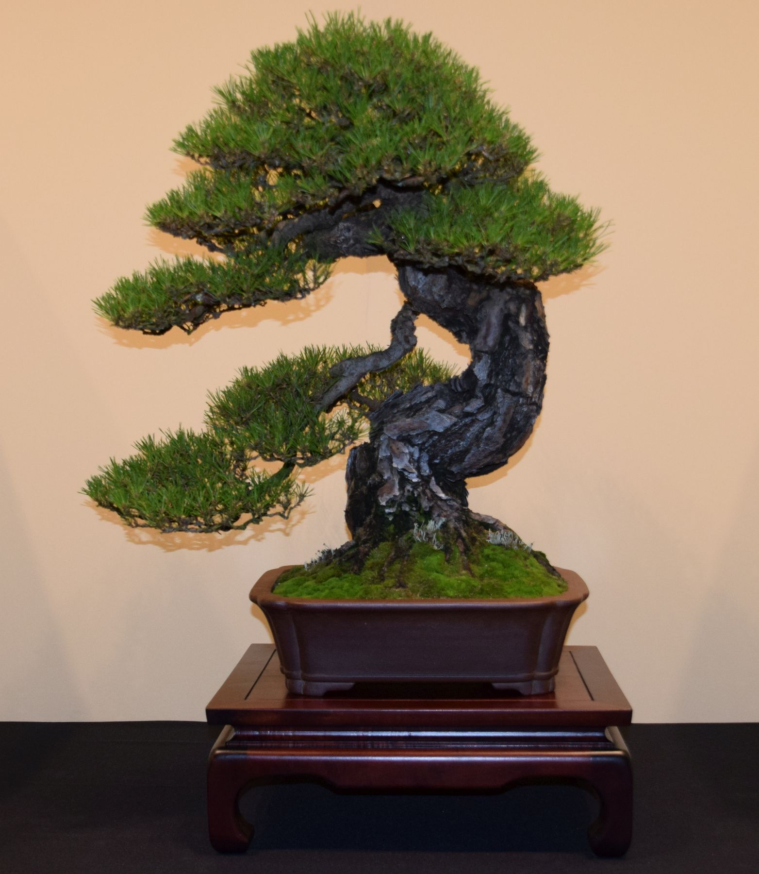 euk-bonsai-ten-2016-jp-polmans-collectie-009
