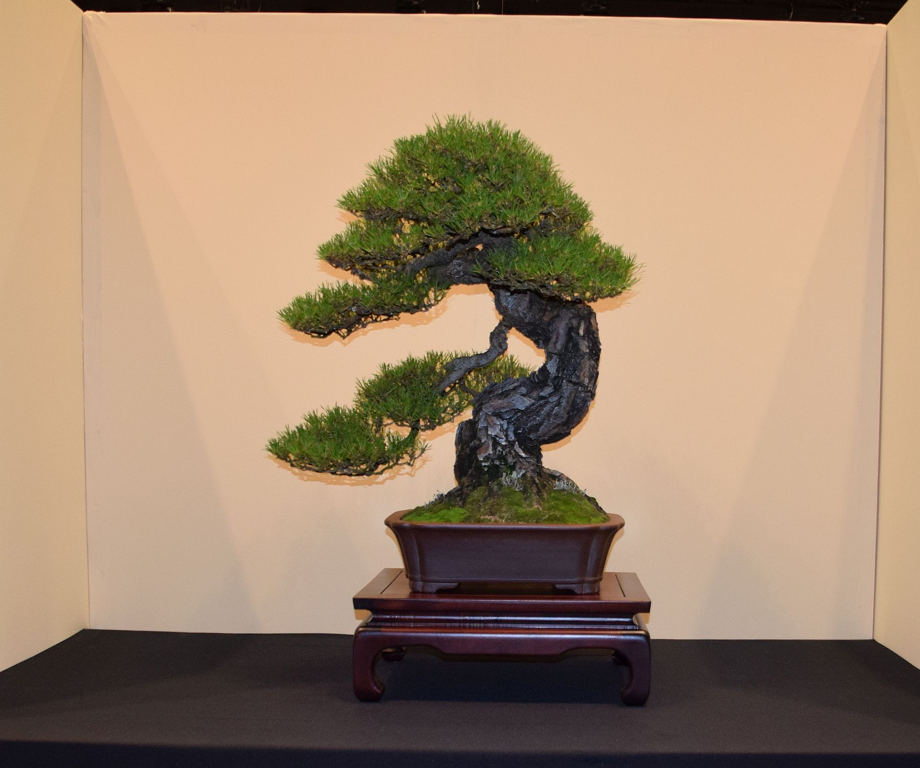euk-bonsai-ten-2016-jp-polmans-collectie-015
